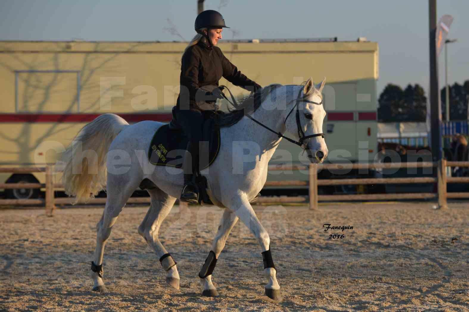 Cheval Passion 2016 - Présentation extérieure de chevaux Arabes montés - 13