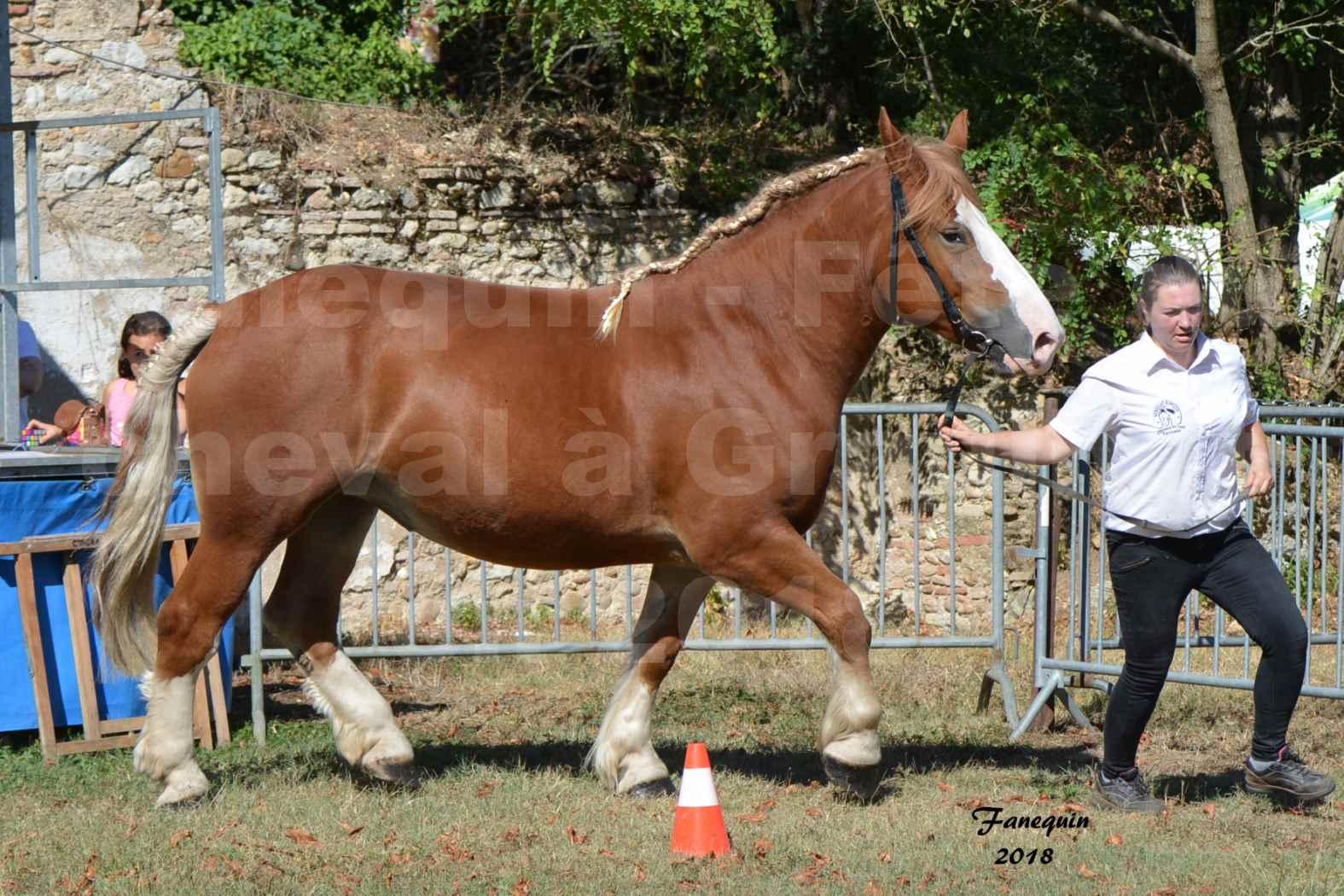 Fête du cheval à GRAULHET le 16 septembre 2018 - Concours Départemental de chevaux de traits - 09