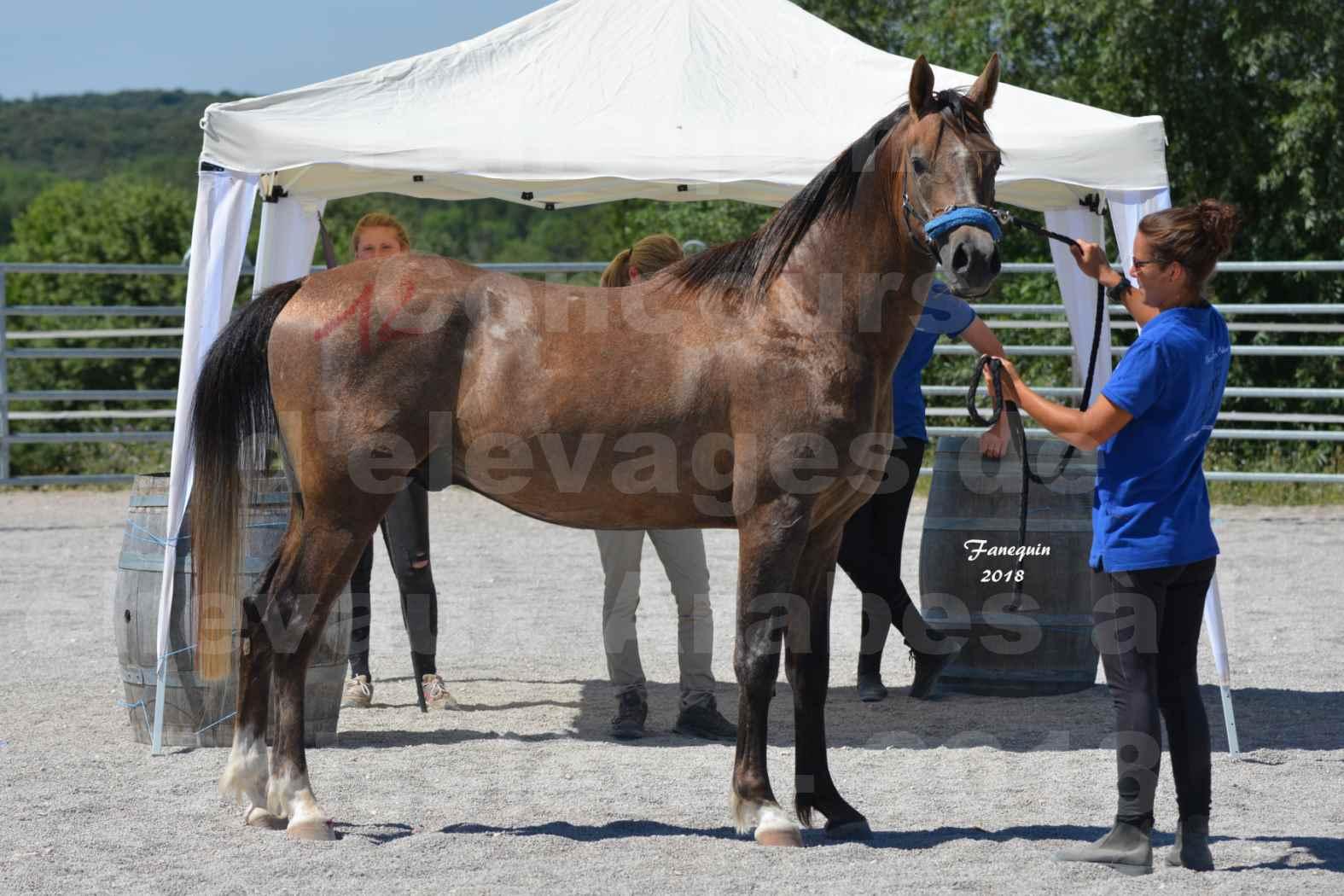 Concours d'Elevage de chevaux Arabes  le 27 juin 2018 à la BOISSIERE - MAREK LOTOIS - 8