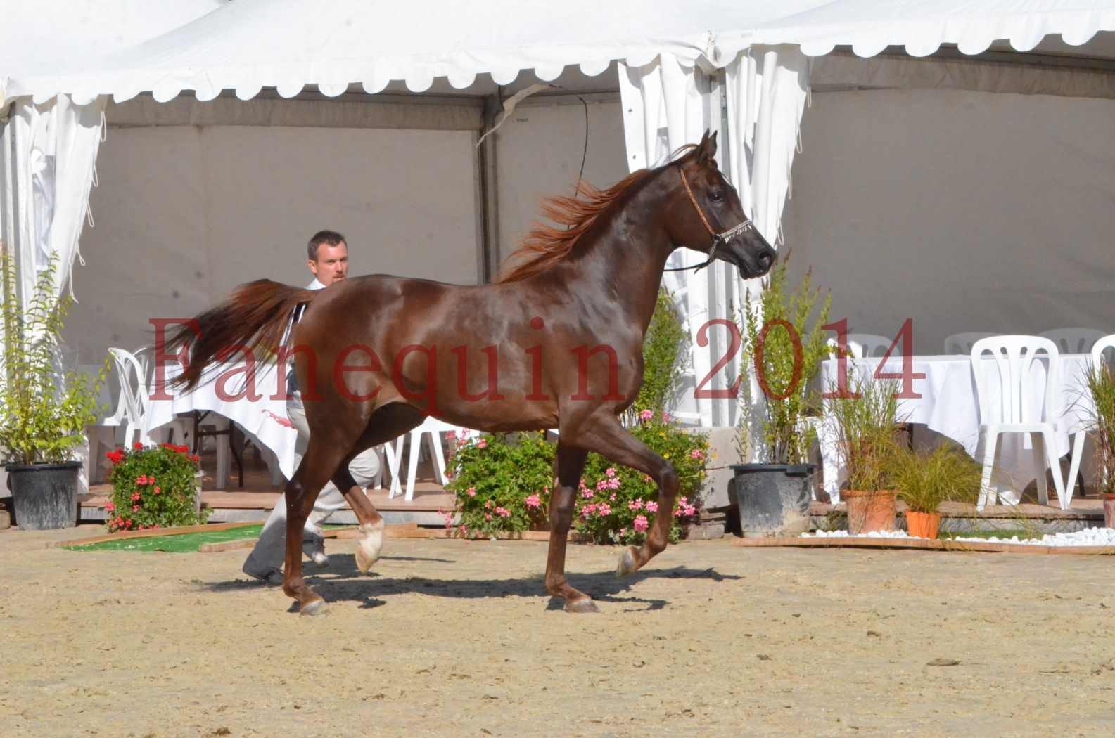 Championnat de FRANCE 2014 - Amateurs - LAMAL - 52