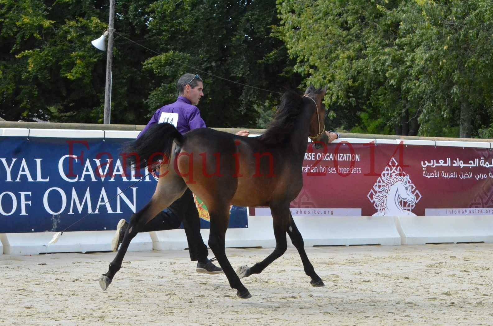 Championnat de FRANCE 2014 - Amateurs - SH FARAJAA - 21