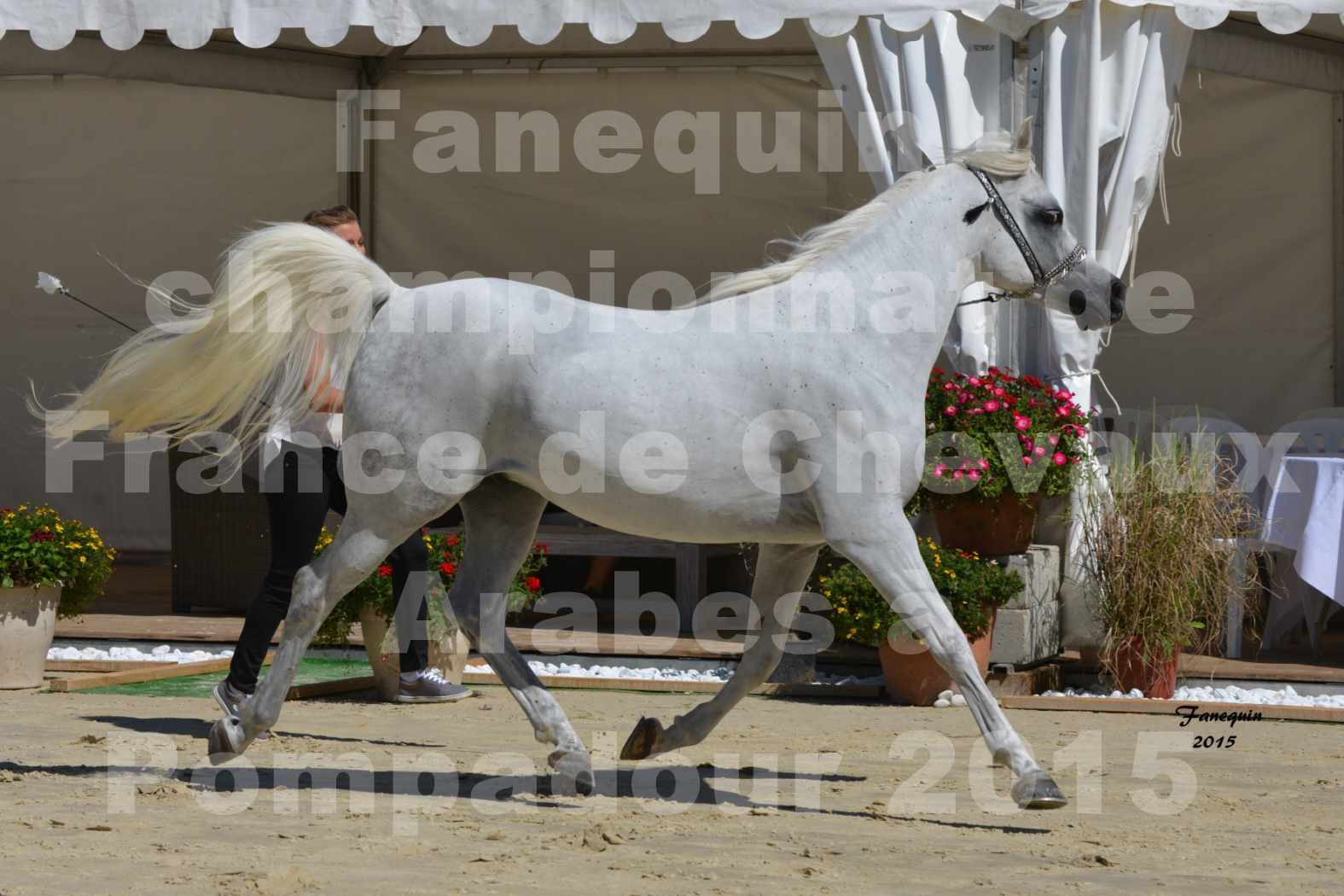 Championnat de FRANCE du cheval ARABE à POMPADOUR 2015 - Classes PROFESSIONNELS - HAADJA - 3