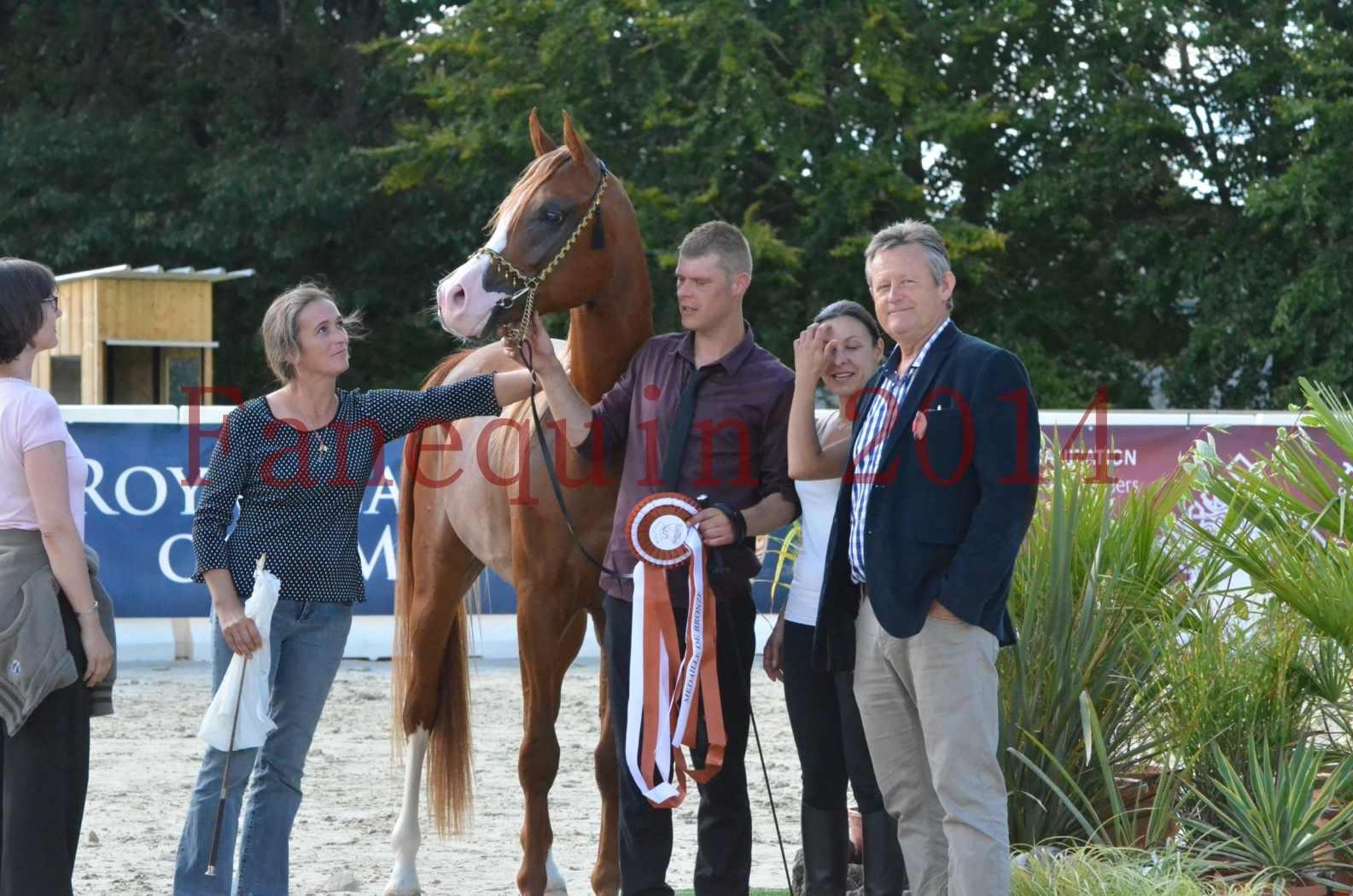 Championnat de FRANCE 2014 - Amateurs - SELECTO IBN SAMAWI - 098