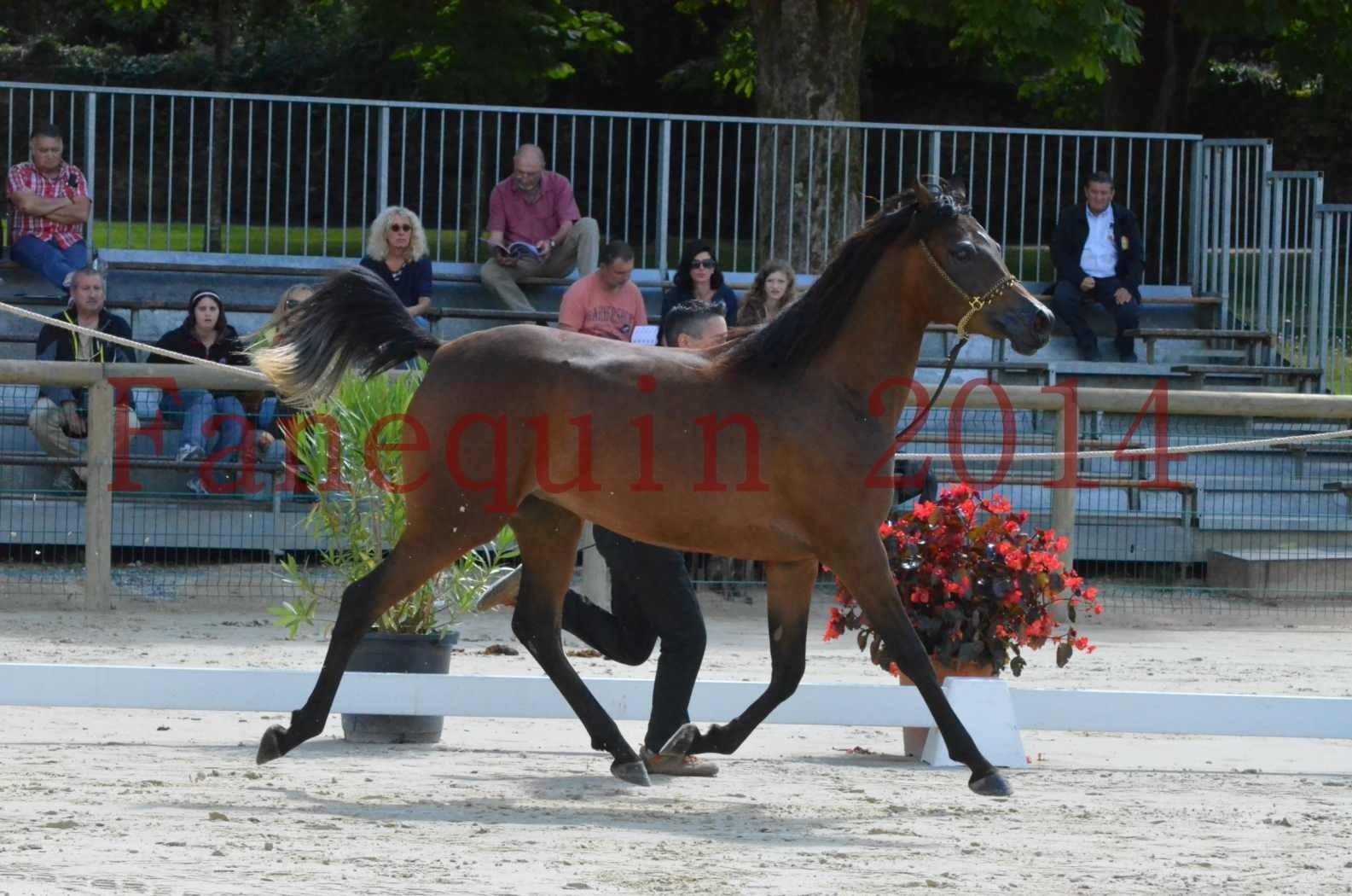 Championnat de FRANCE 2014 - Amateurs - KAL'ELLE D'ELHORIA - 46