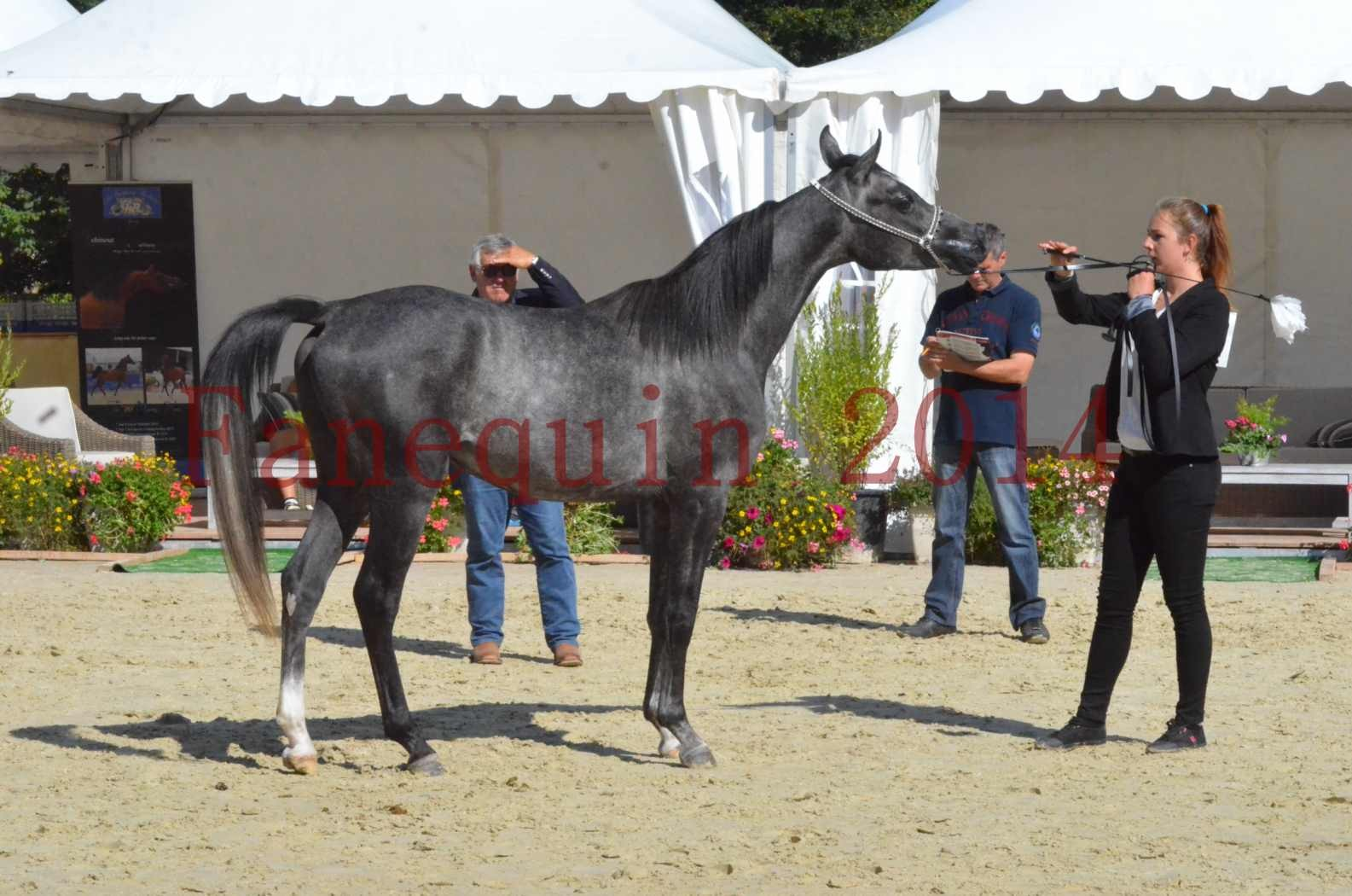 Championnat de FRANCE 2014 - Amateurs - CHTI KAID D'AUBIN - 45