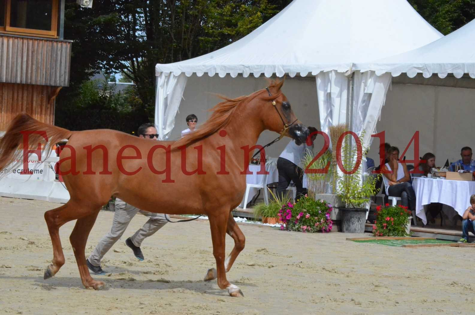 CHAMPIONNAT DE FRANCE 2014 A POMPADOUR - Championnat - LUTFINAH JA - 30