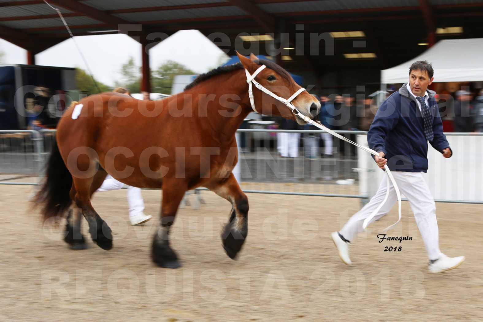 Concours Régional OCCITANIE de chevaux de traits à REQUISTA - COMETE DE GRILLOLES - 3