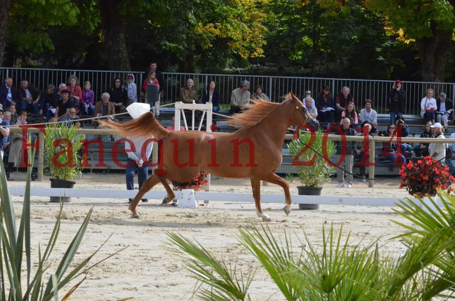 CHAMPIONNAT DE FRANCE 2014 A POMPADOUR - Sélection - LUTFINAH JA - 20