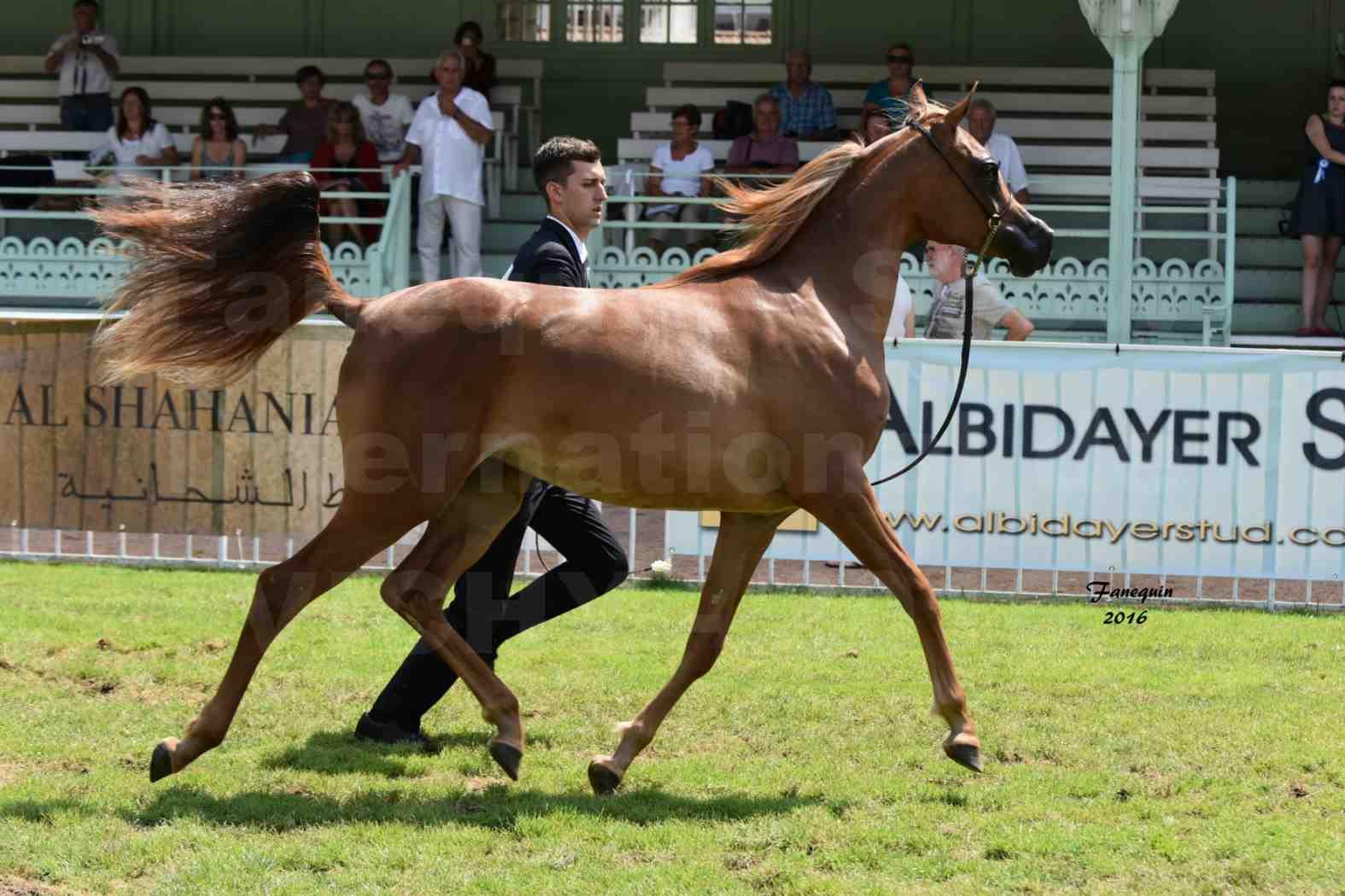 International Arabian Horse Show B de VICHY 2016 - JA FALAENE - Notre Sélection - 03