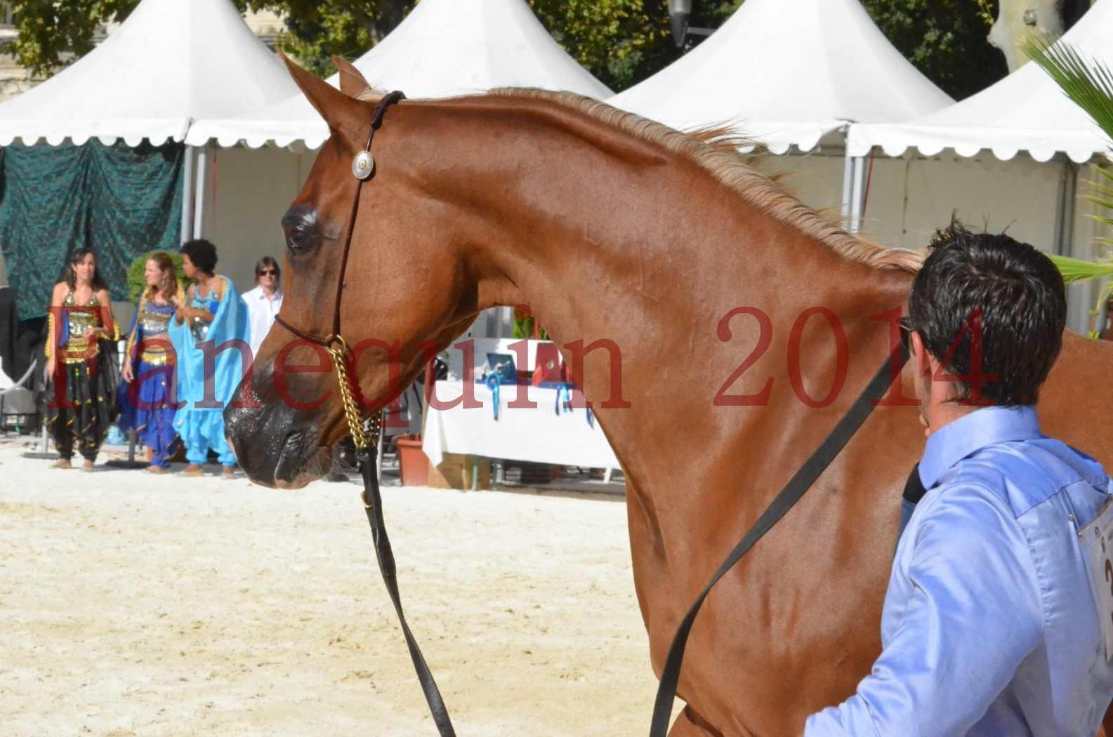 Concours National de Nîmes de chevaux ARABES 2014 - Championnat - MASSAI DE BARREL - 67
