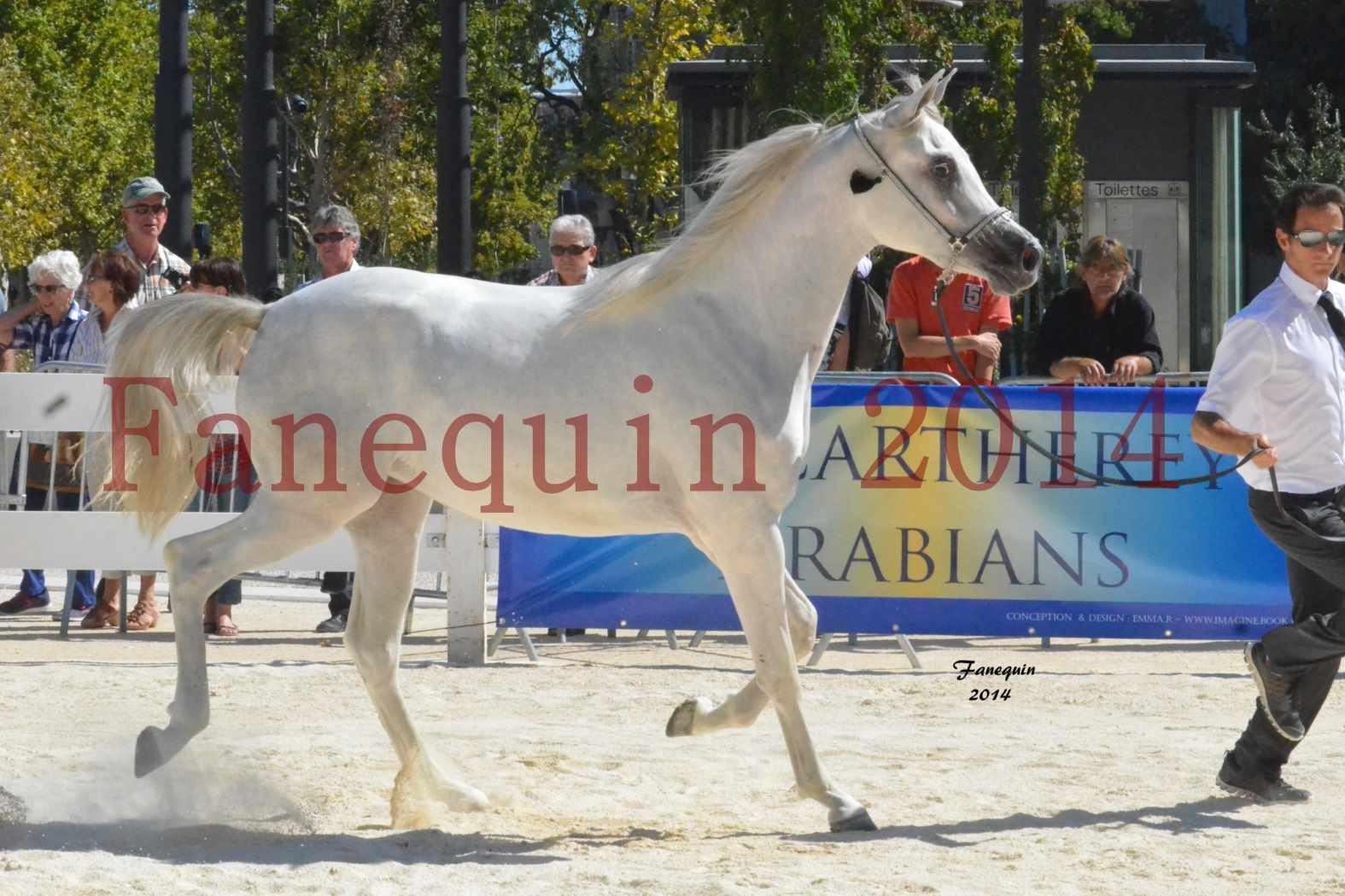 Concours National de Nîmes de chevaux ARABES 2014 - ENVY ETERNITY - 15