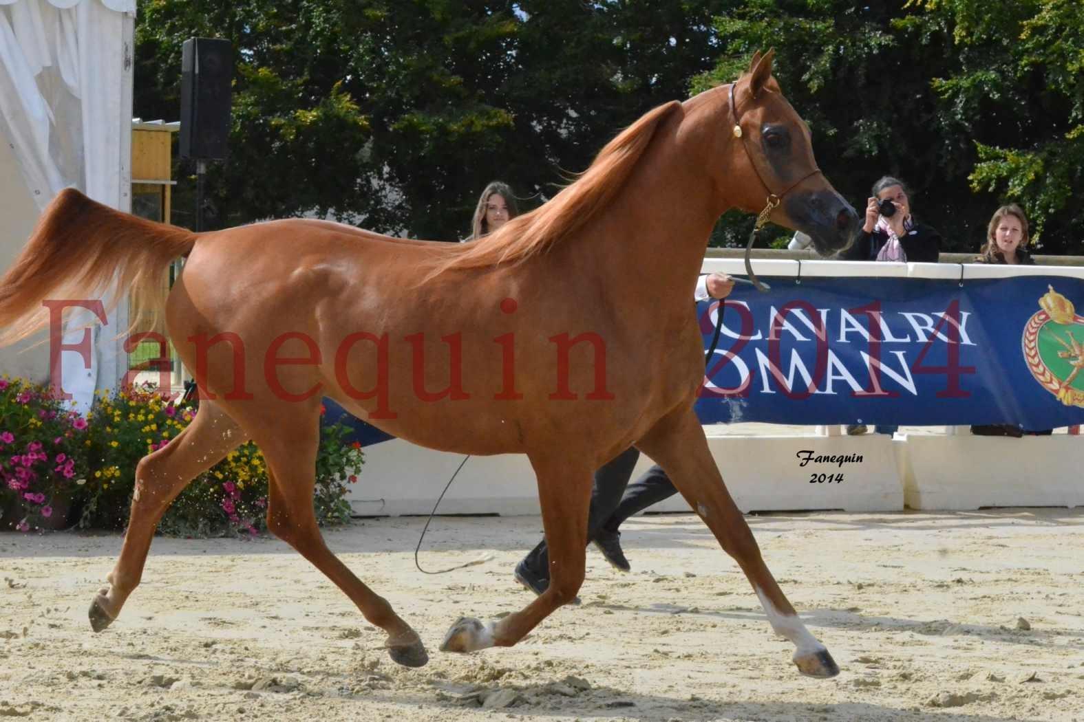 CHAMPIONNAT DE FRANCE 2014 A POMPADOUR - Notre Sélection - LUTFINAH JA - 16