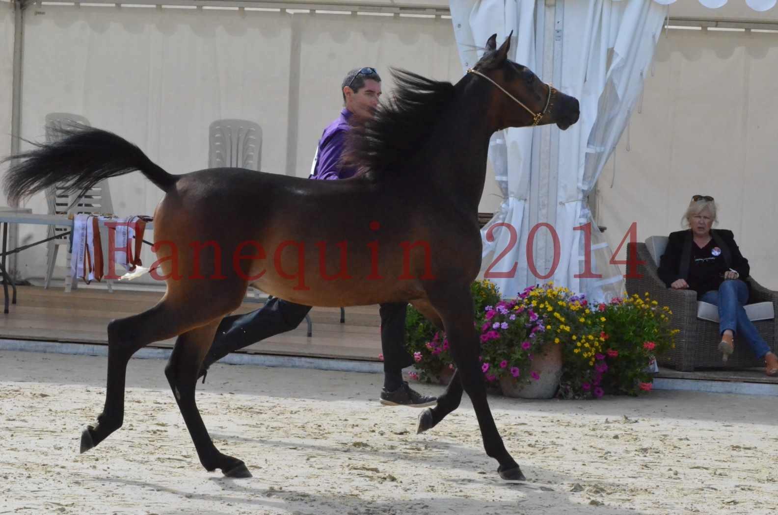 Championnat de FRANCE 2014 - Amateurs - SH FARAJAA - 03
