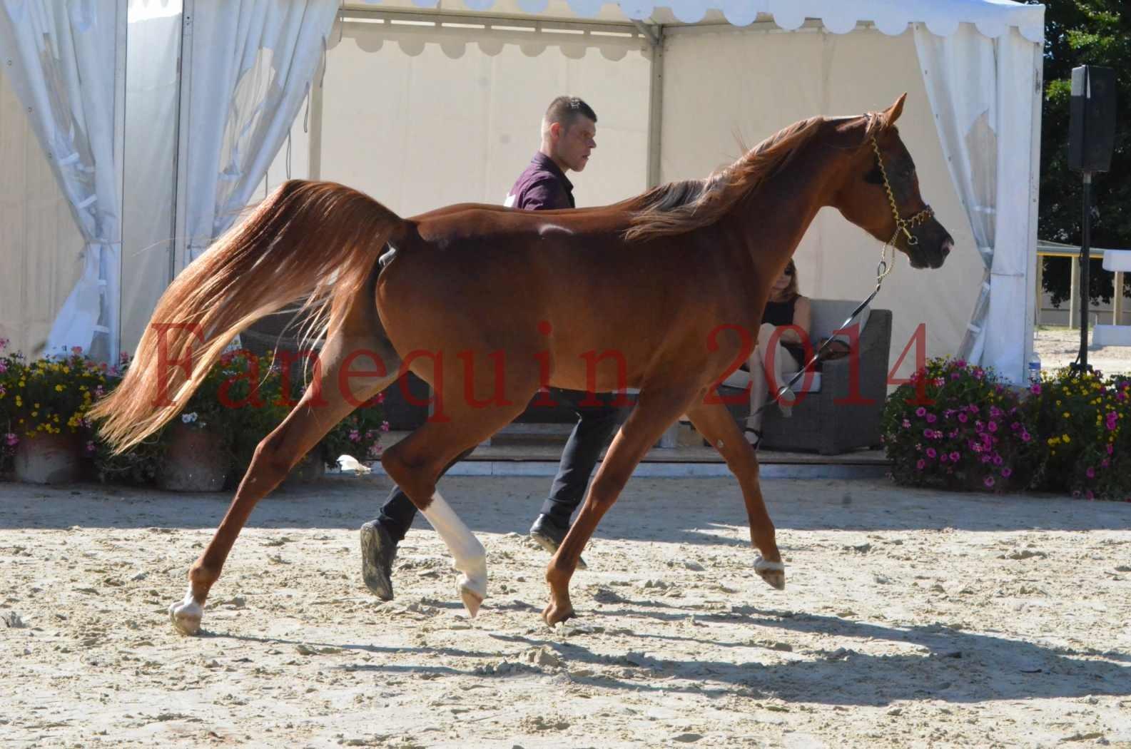 Championnat de FRANCE 2014 - Amateurs - SELECTO IBN SAMAWI - 030