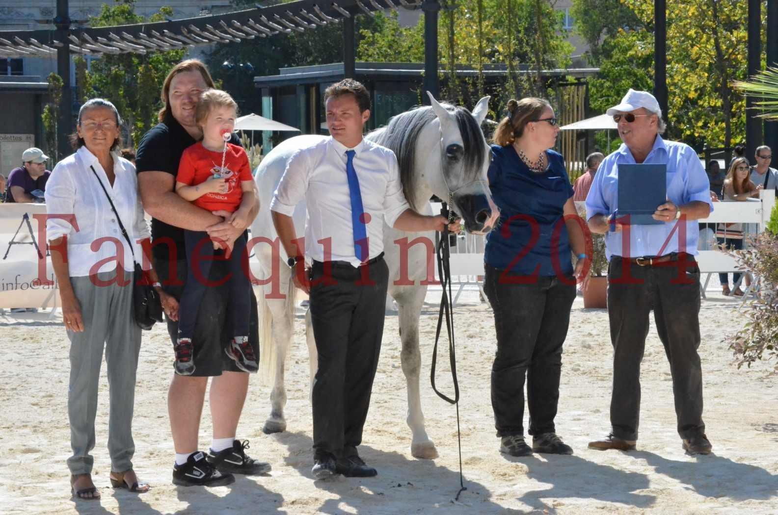 Concours National de Nîmes de chevaux ARABES 2014 - Sélection - SHAOLIN DE NEDJAIA - 90