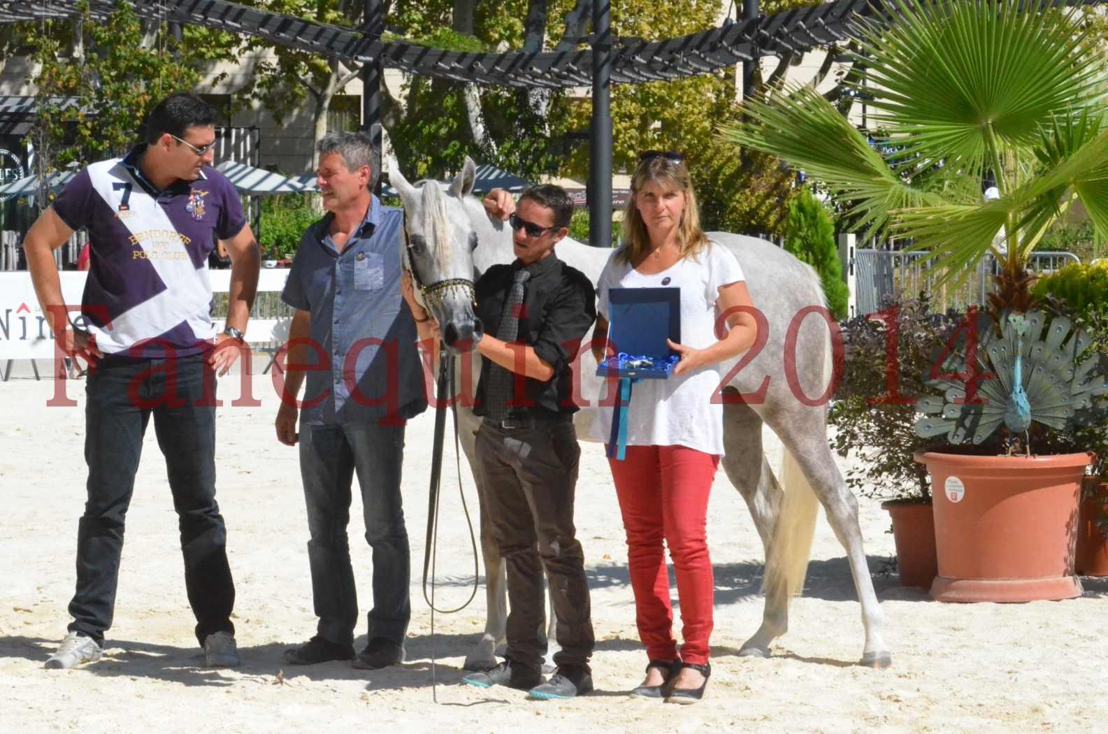 Concours national de Nîmes 2014 - Sélection  - VOLODIA DE LAFON - 34