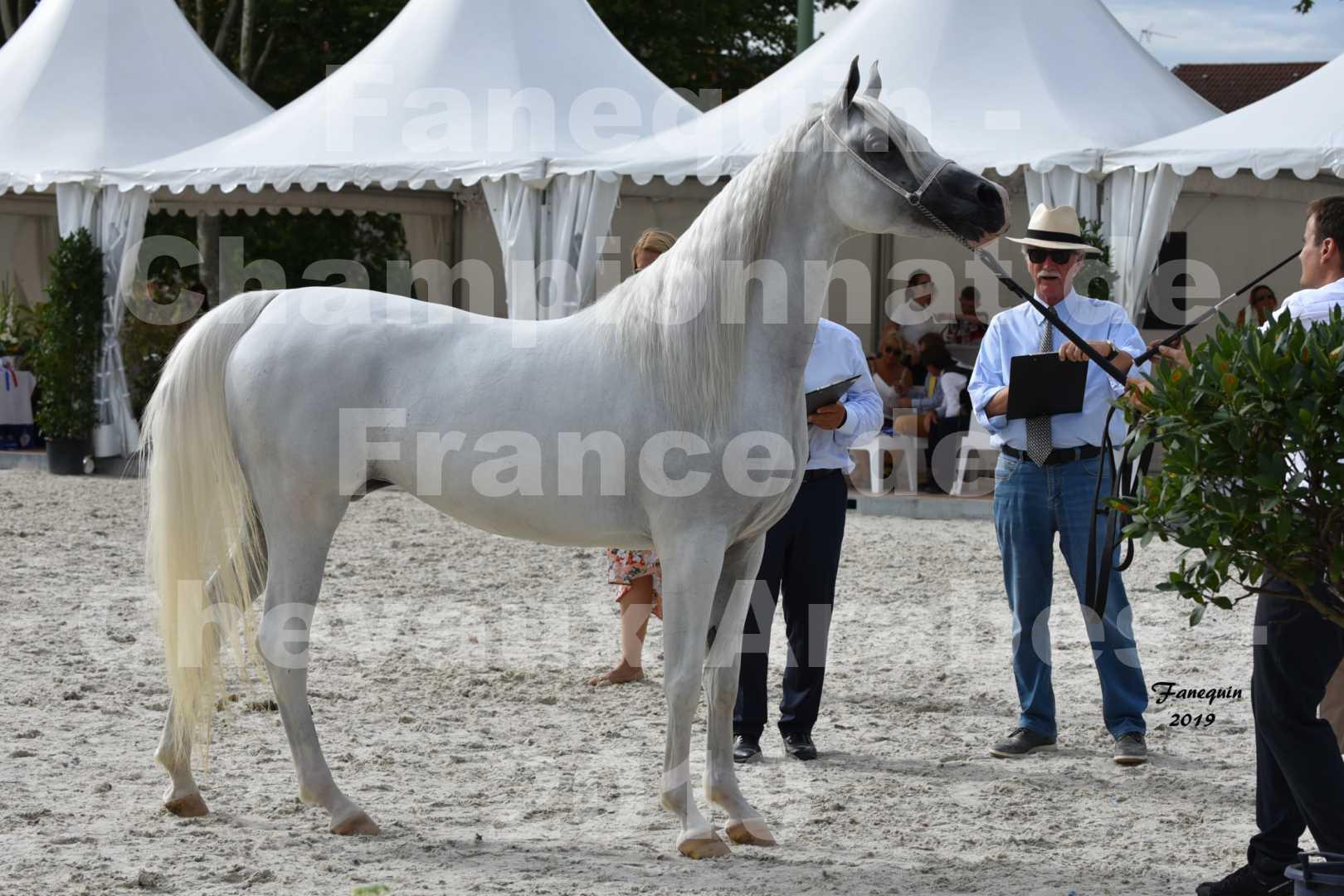 Championnat de France des chevaux Arabes en 2019 à VICHY - PIWNICIA NUNKI - 6
