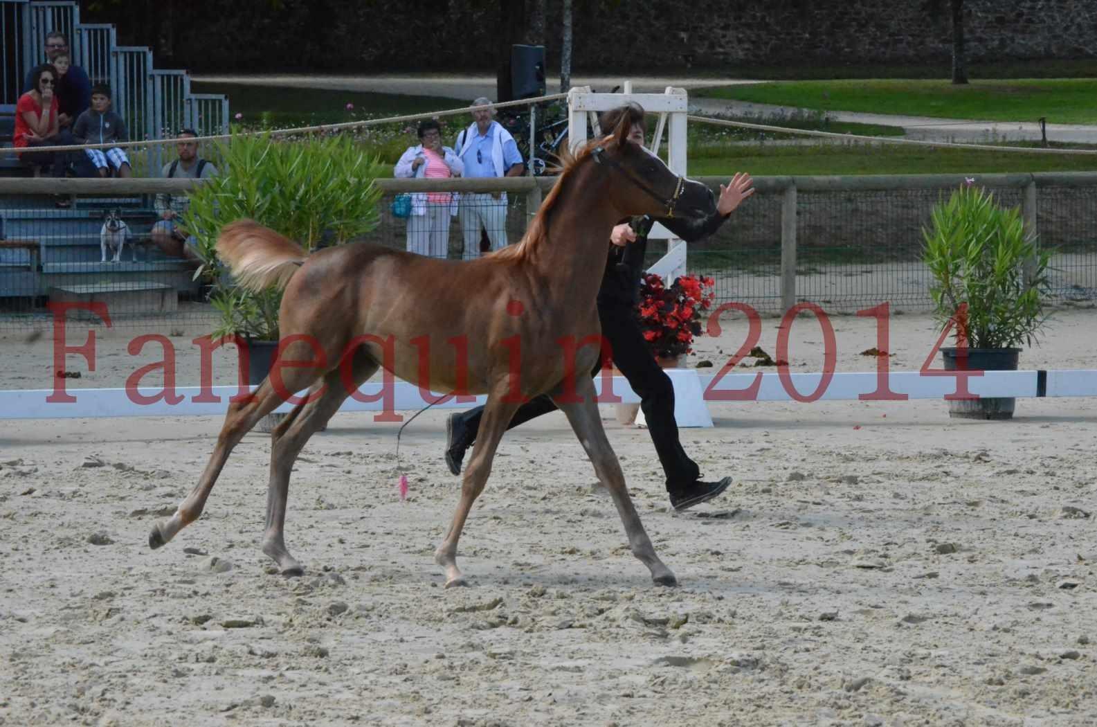 CHAMPIONNAT DE FRANCE 2014 A POMPADOUR - Championnat - TSAR KENZA - 01