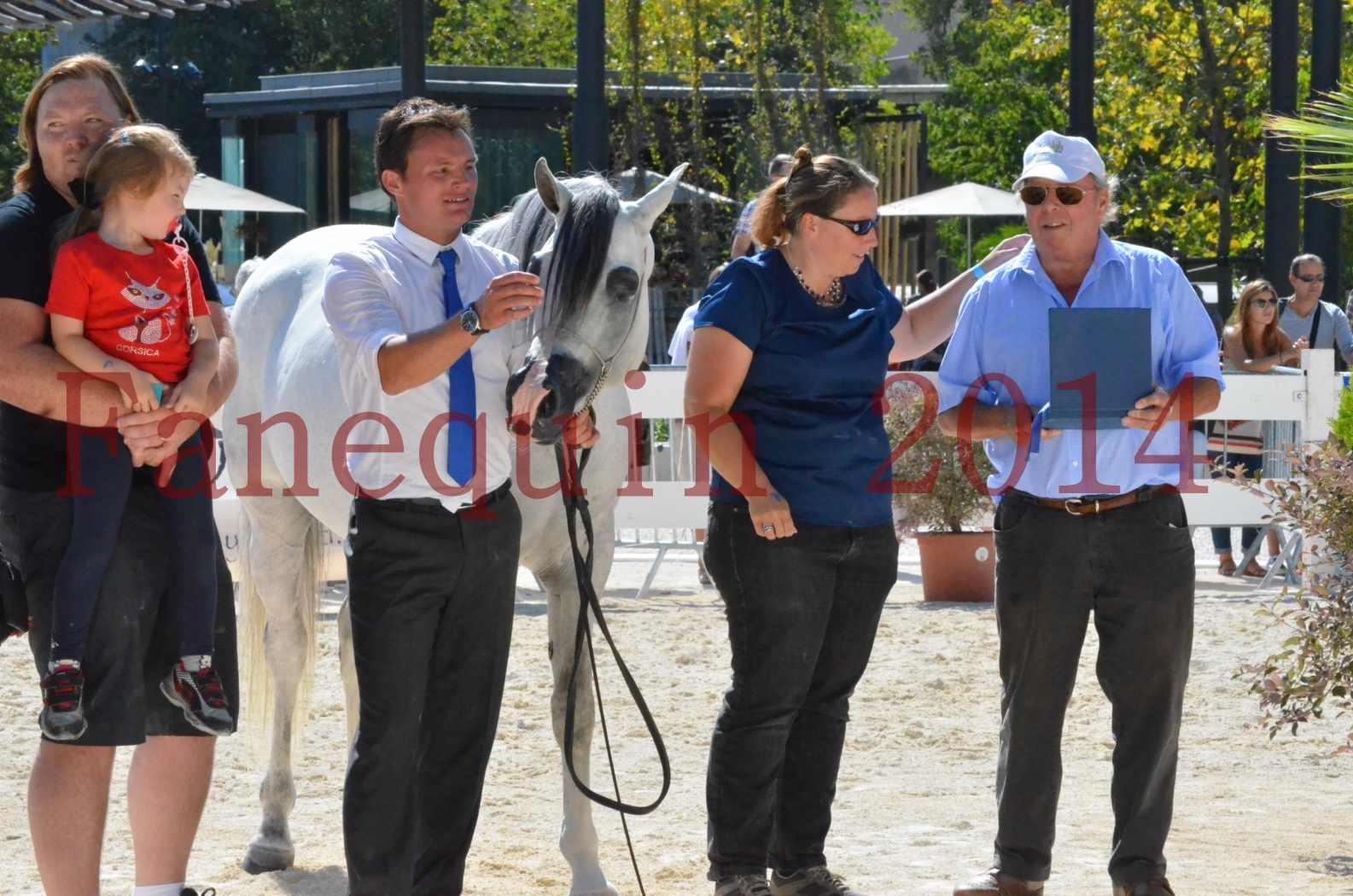 Concours National de Nîmes de chevaux ARABES 2014 - Sélection - SHAOLIN DE NEDJAIA - 89