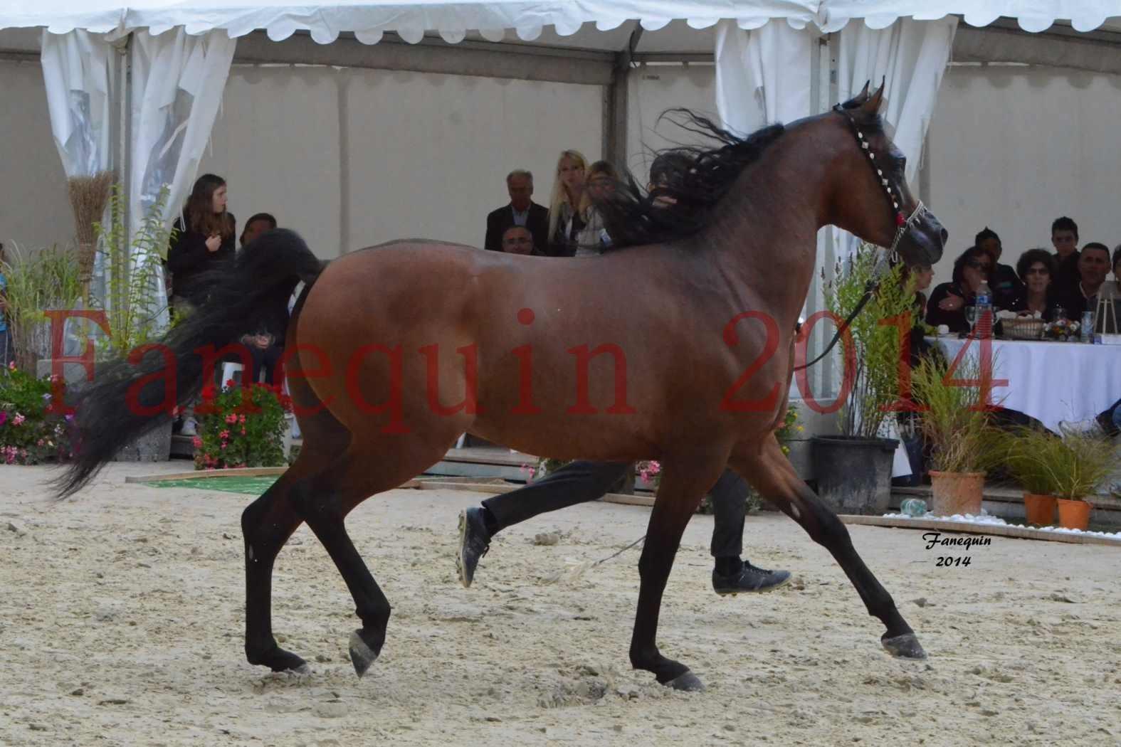 CHAMPIONNAT DE FRANCE 2014 A POMPADOUR - Notre Sélection - ABSOLUT DE DJOON - 04