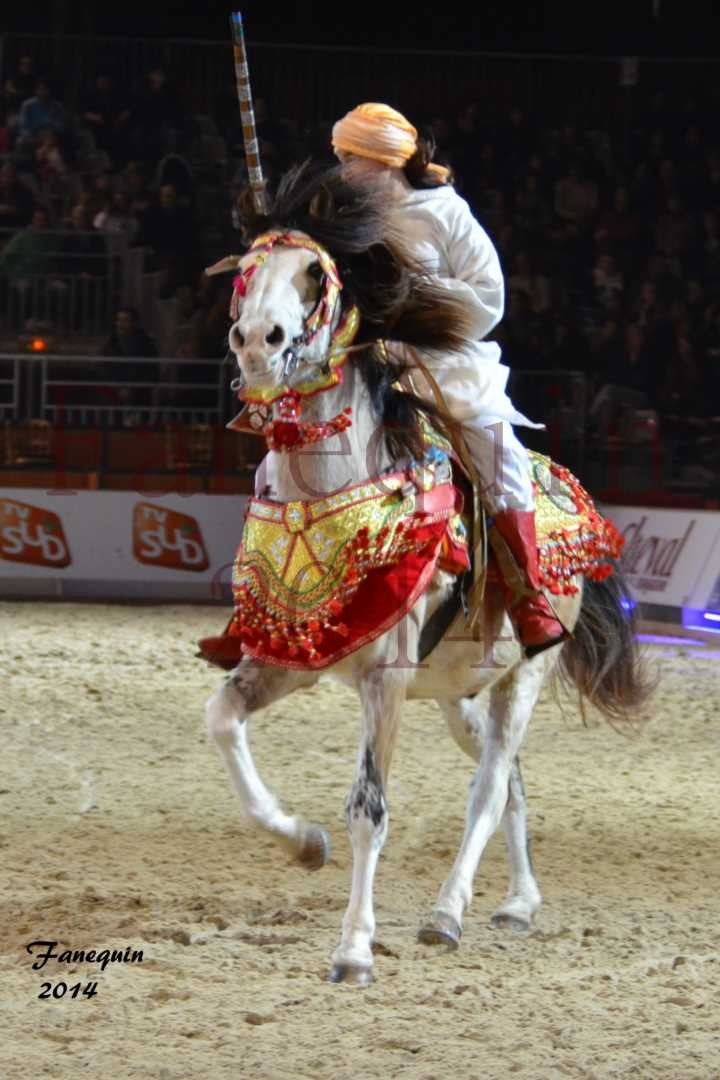 Show des races - Chevaux BARBE 36