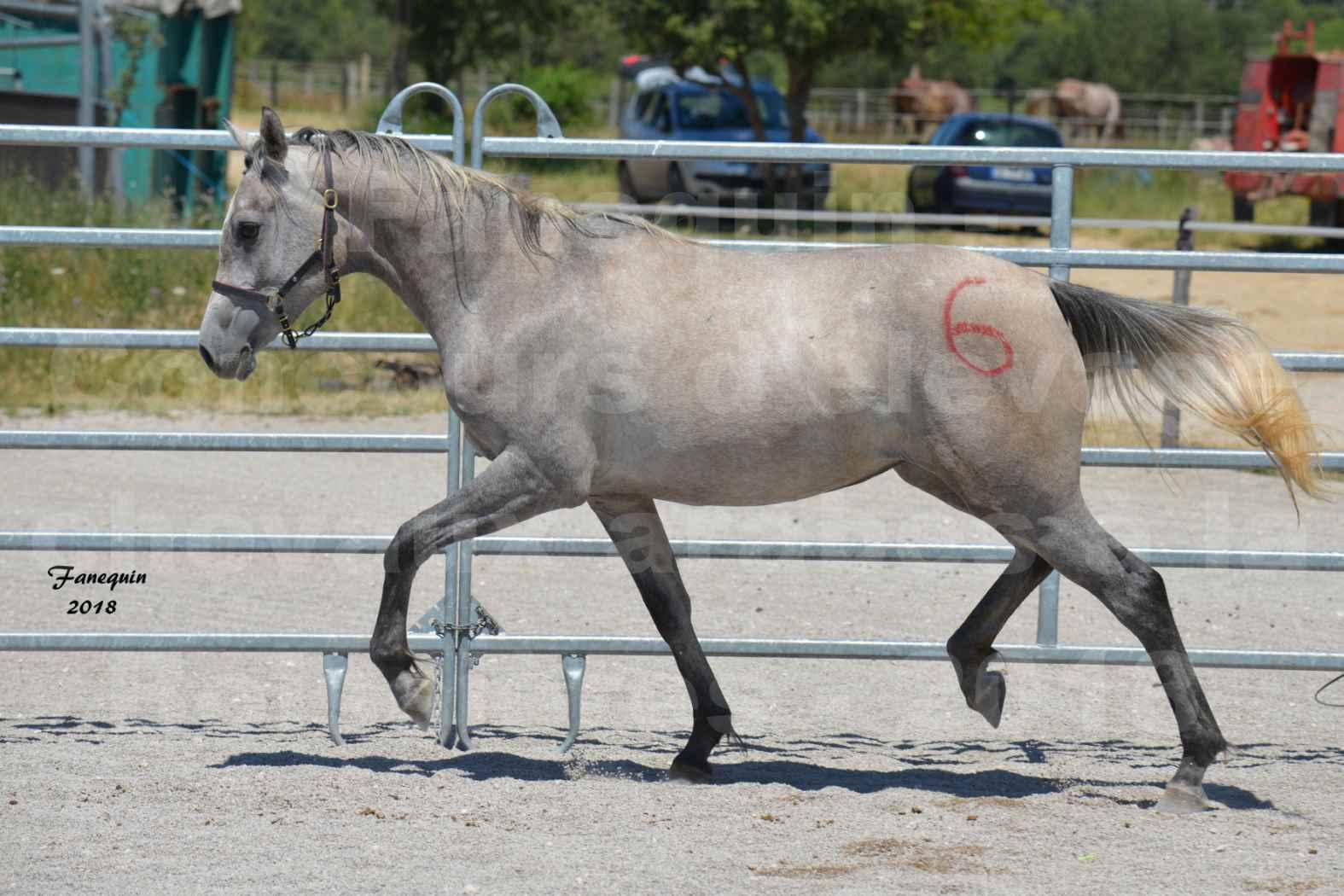 Concours d'Elevage de chevaux Arabes  le 27 juin 2018 à la BOISSIERE - GAZAK D'AURIERES - 06