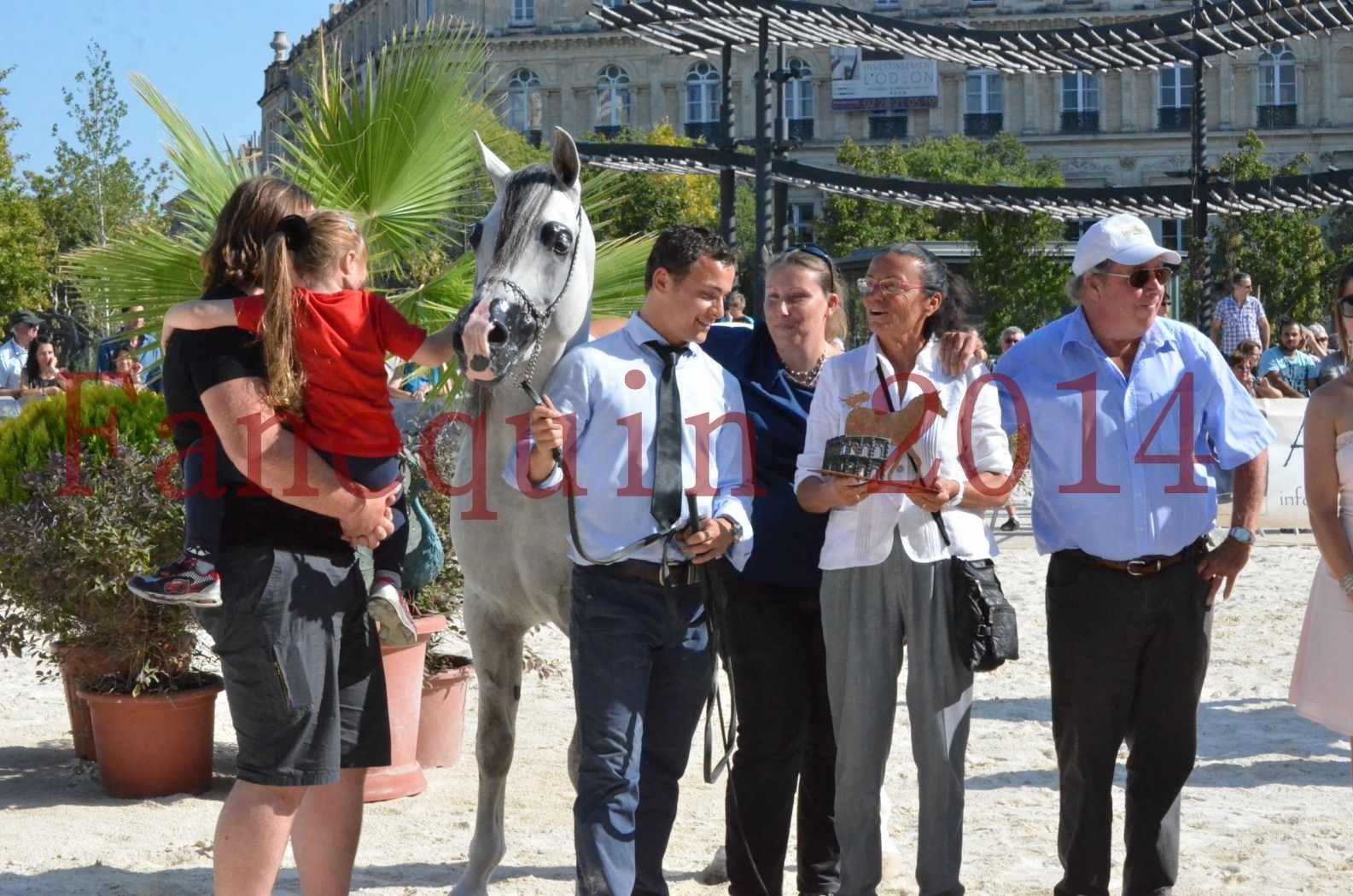Concours National de Nîmes de chevaux ARABES 2014 - Championnat - SHAOLIN DE NEDJAIA - 47