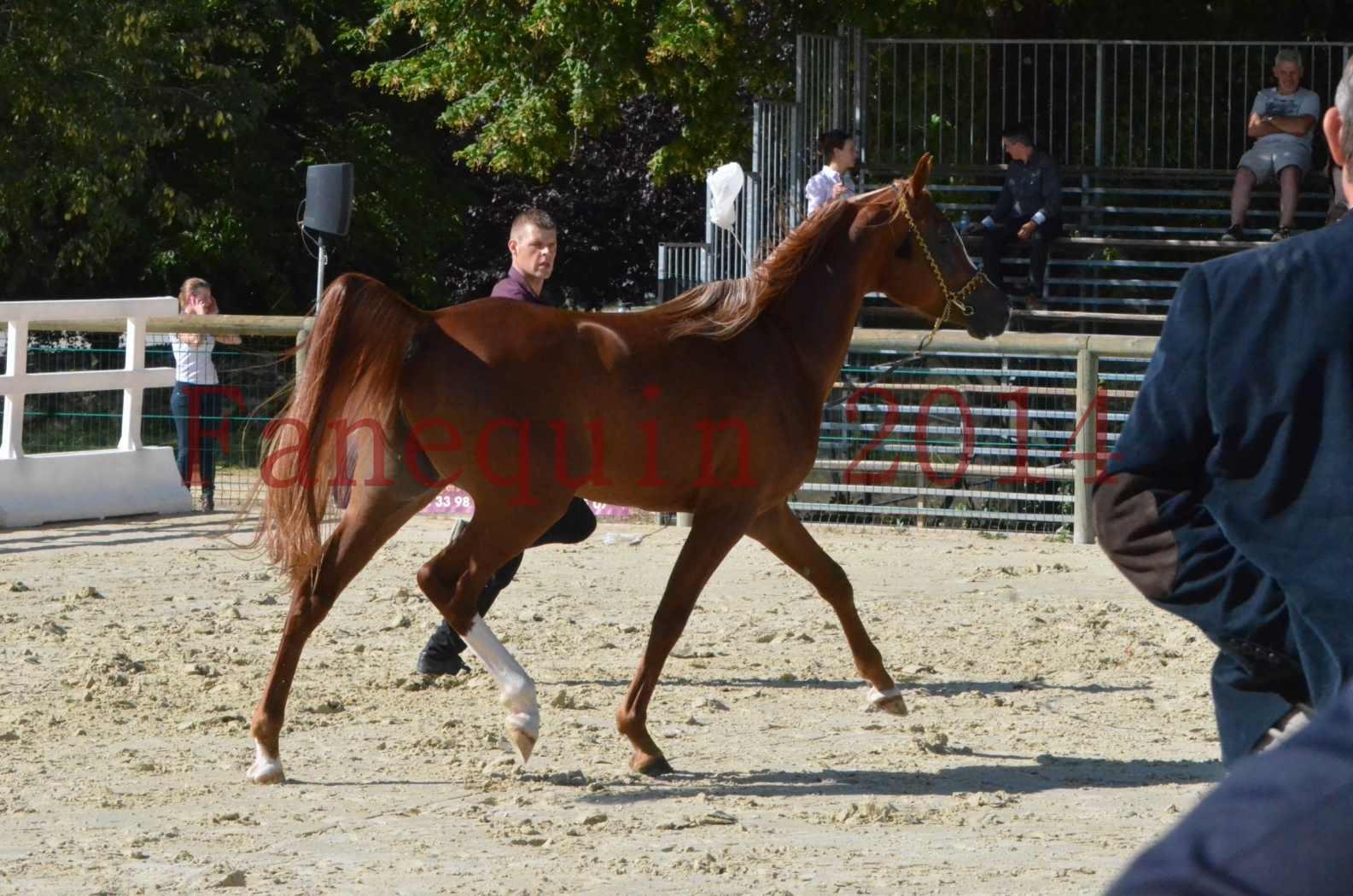 Championnat de FRANCE 2014 - Amateurs - SELECTO IBN SAMAWI - 040