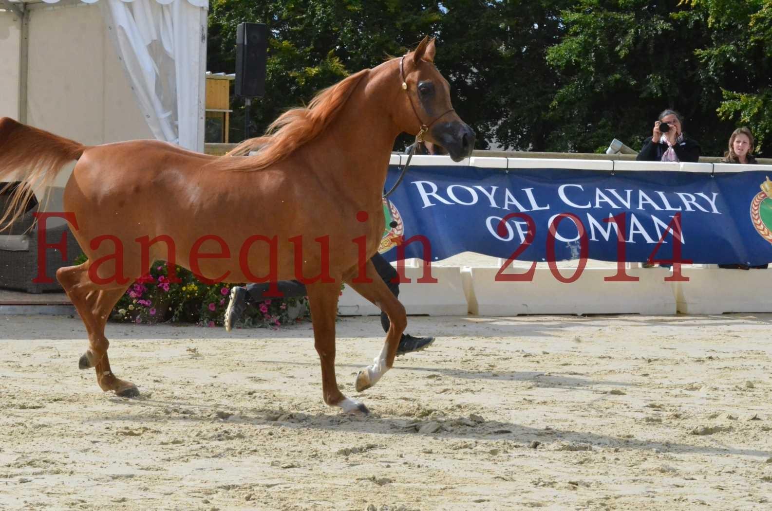 CHAMPIONNAT DE FRANCE 2014 A POMPADOUR - Sélection - LUTFINAH JA - 24