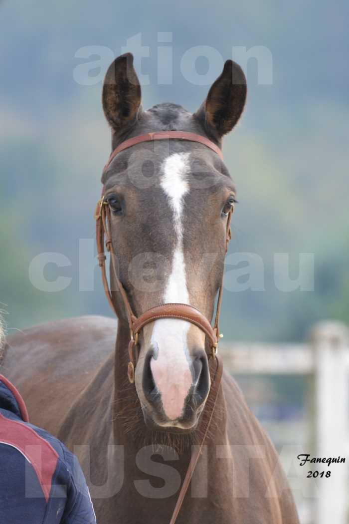 Confirmation de chevaux LUSITANIENS aux Haras d'UZES Novembre 2018 - LOUNA DU CASTEL