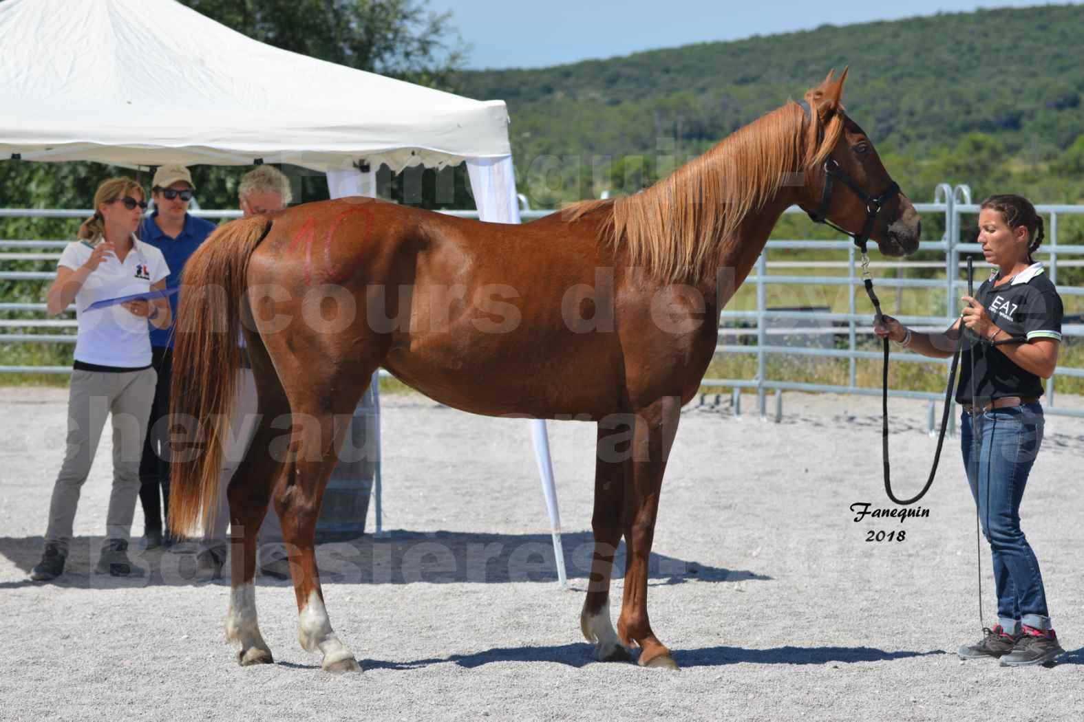 Concours d'Elevage de chevaux Arabes  le 27 juin 2018 à la BOISSIERE - FINLEY DES DOLINES - 11