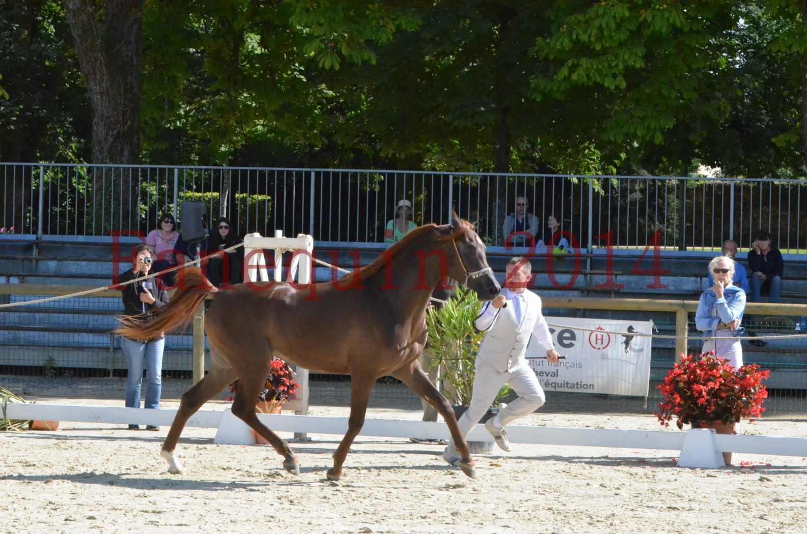 Championnat de FRANCE 2014 - Amateurs - LAMAL - 03