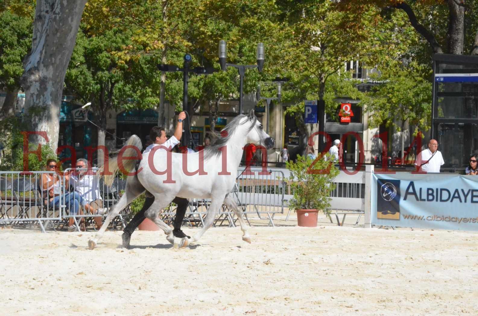 Concours National de Nîmes de chevaux ARABES 2014 - Sélection - SHAOLIN DE NEDJAIA - 41