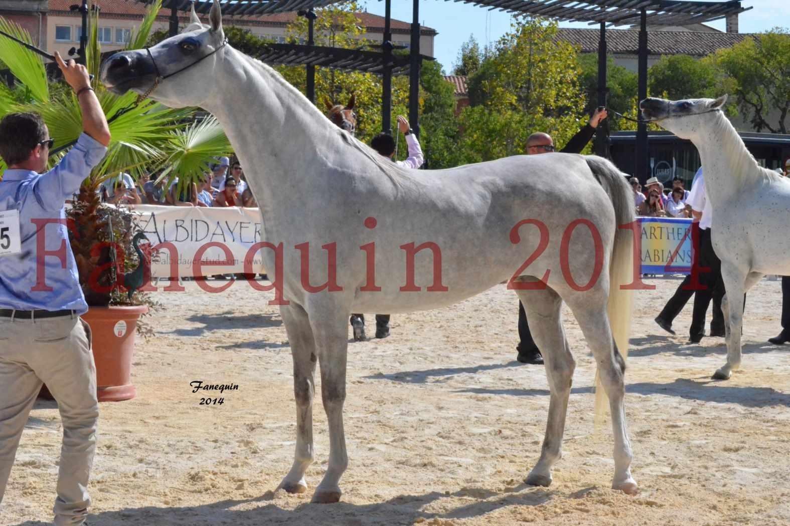 Concours National de Nîmes de chevaux ARABES 2014 - Notre Sélection - ELLESTERA - 05