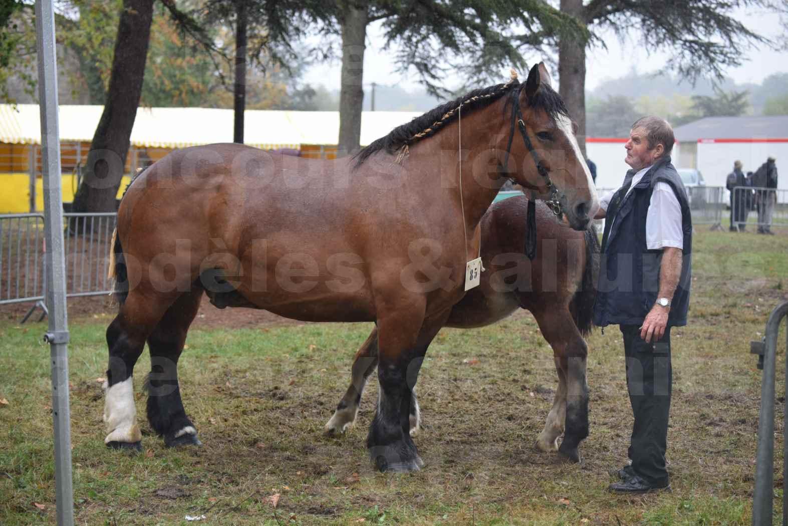Concours Régional de chevaux de traits en 2017 - Jument Suitée - Trait BRETON - UNION 11 - 02