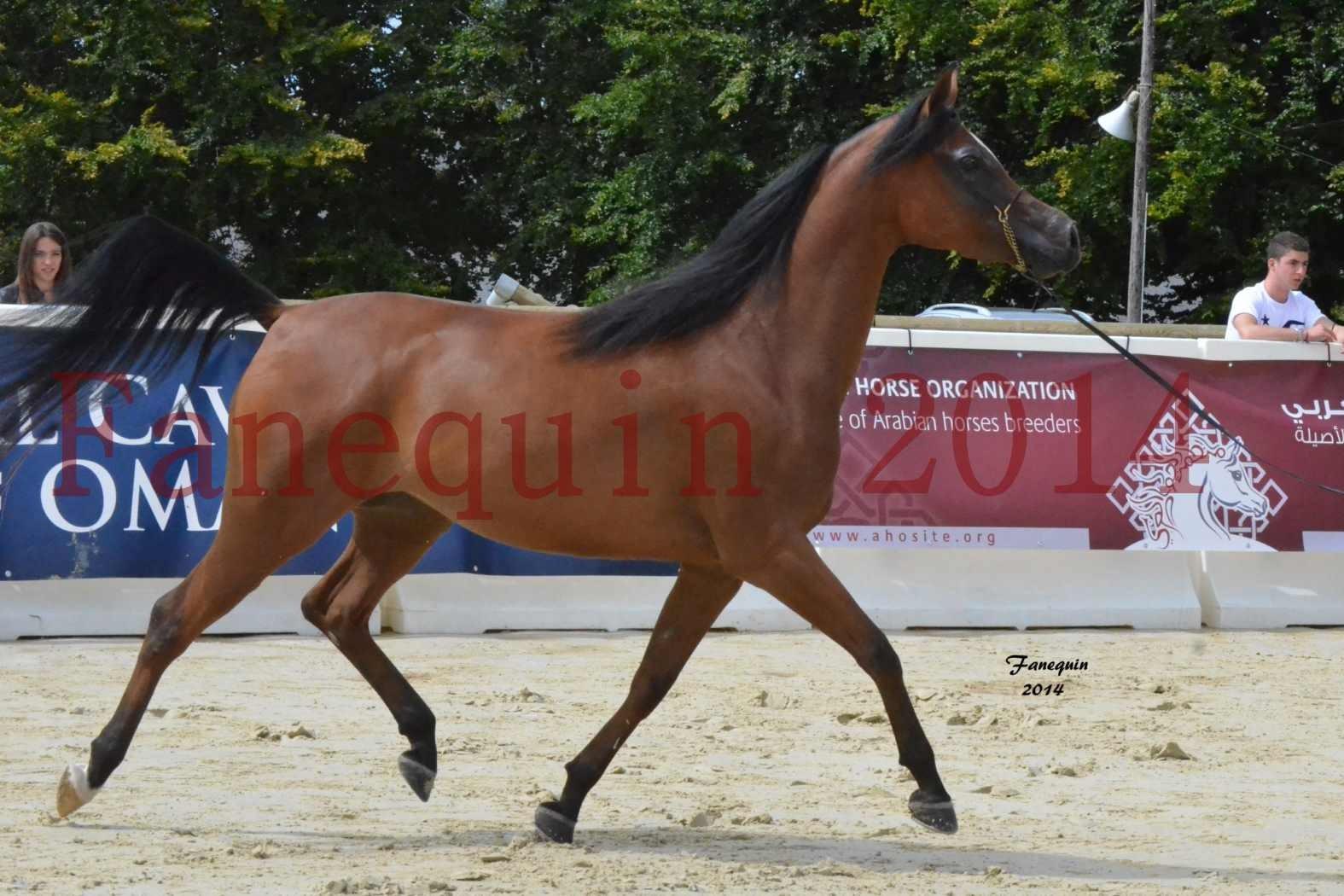 CHAMPIONNAT DE FRANCE 2014 A POMPADOUR - Notre Sélection - KARAWAN ALBIDAYER - 04