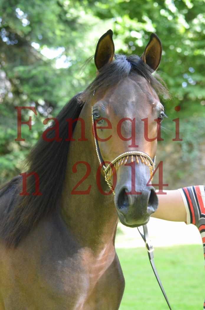 Championnat de FRANCE 2014 - Amateurs - SH FARAJAA - 106