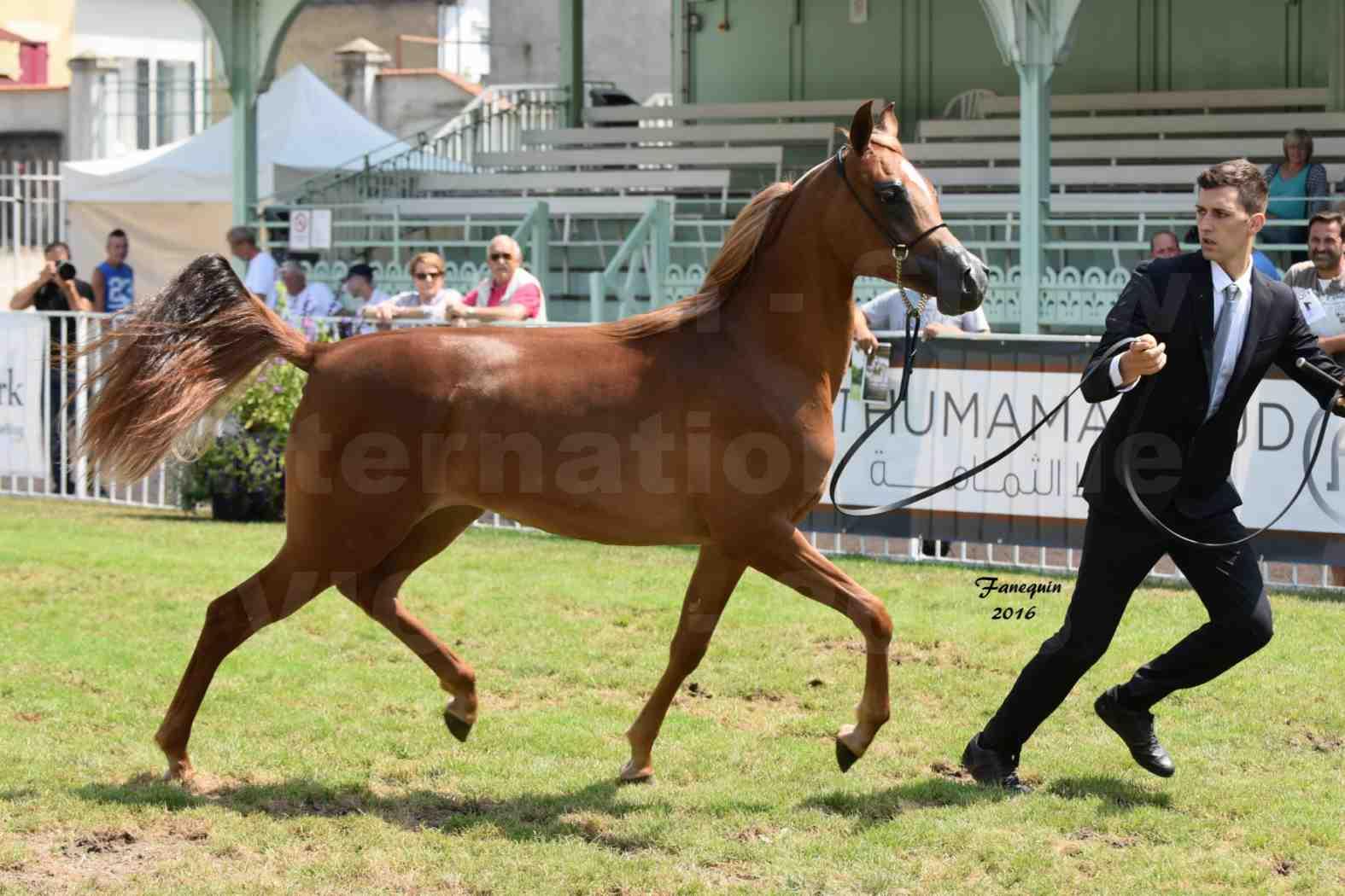 International Arabian Horse Show B de VICHY 2016 - JA FALAENE - Notre Sélection - 01
