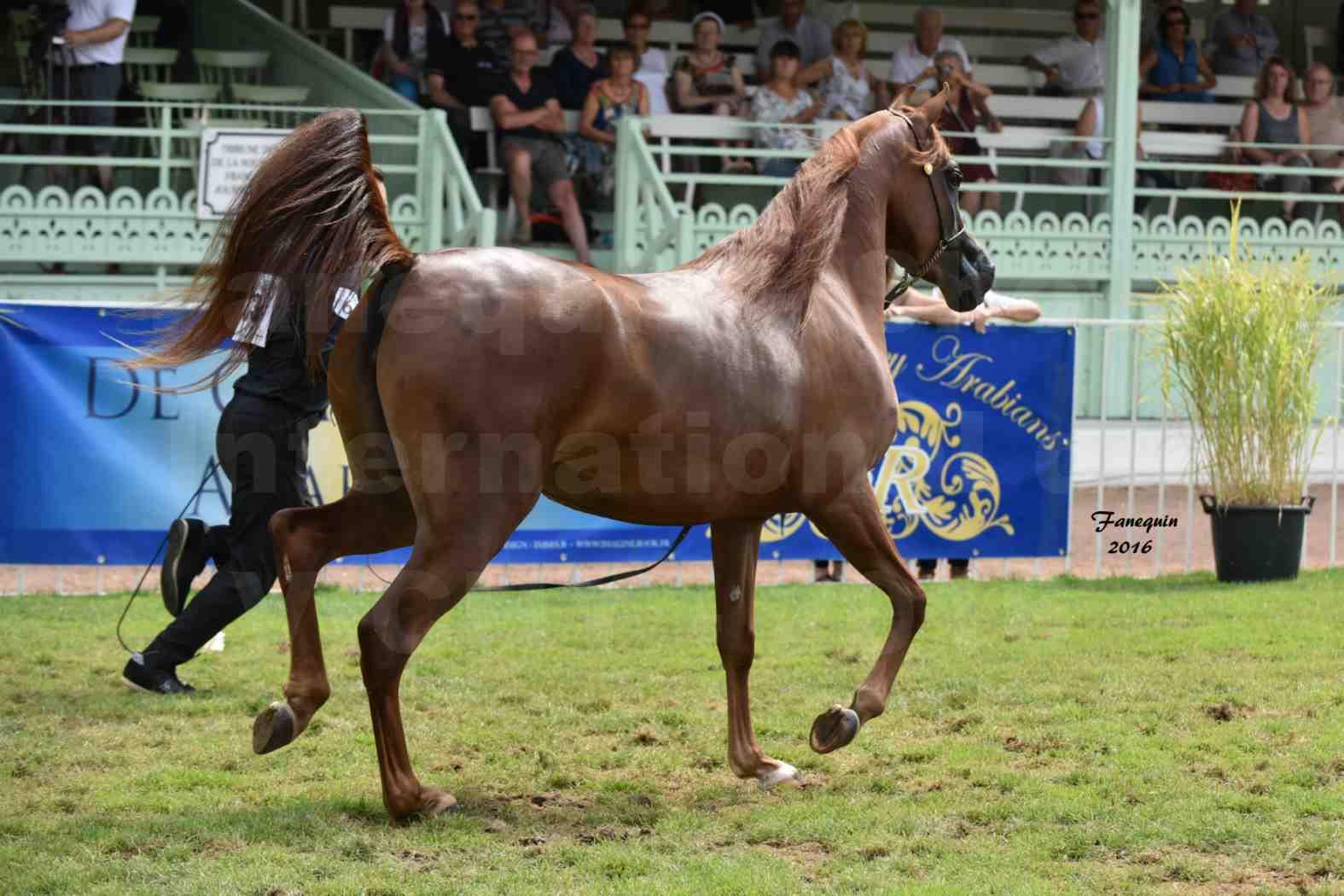International Arabian Horse Show B de VICHY 2016 - PEARL DE DJOON - Notre Sélection - 34