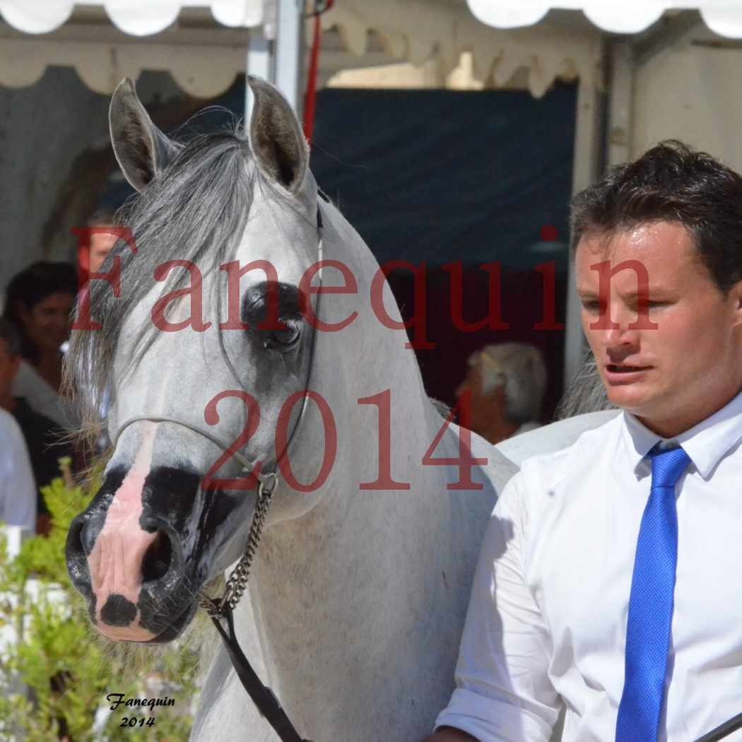 Concours National de Nîmes de chevaux ARABES 2014 - Notre Sélection - Portraits - SHAOLIN DE NEDJAIA - 12