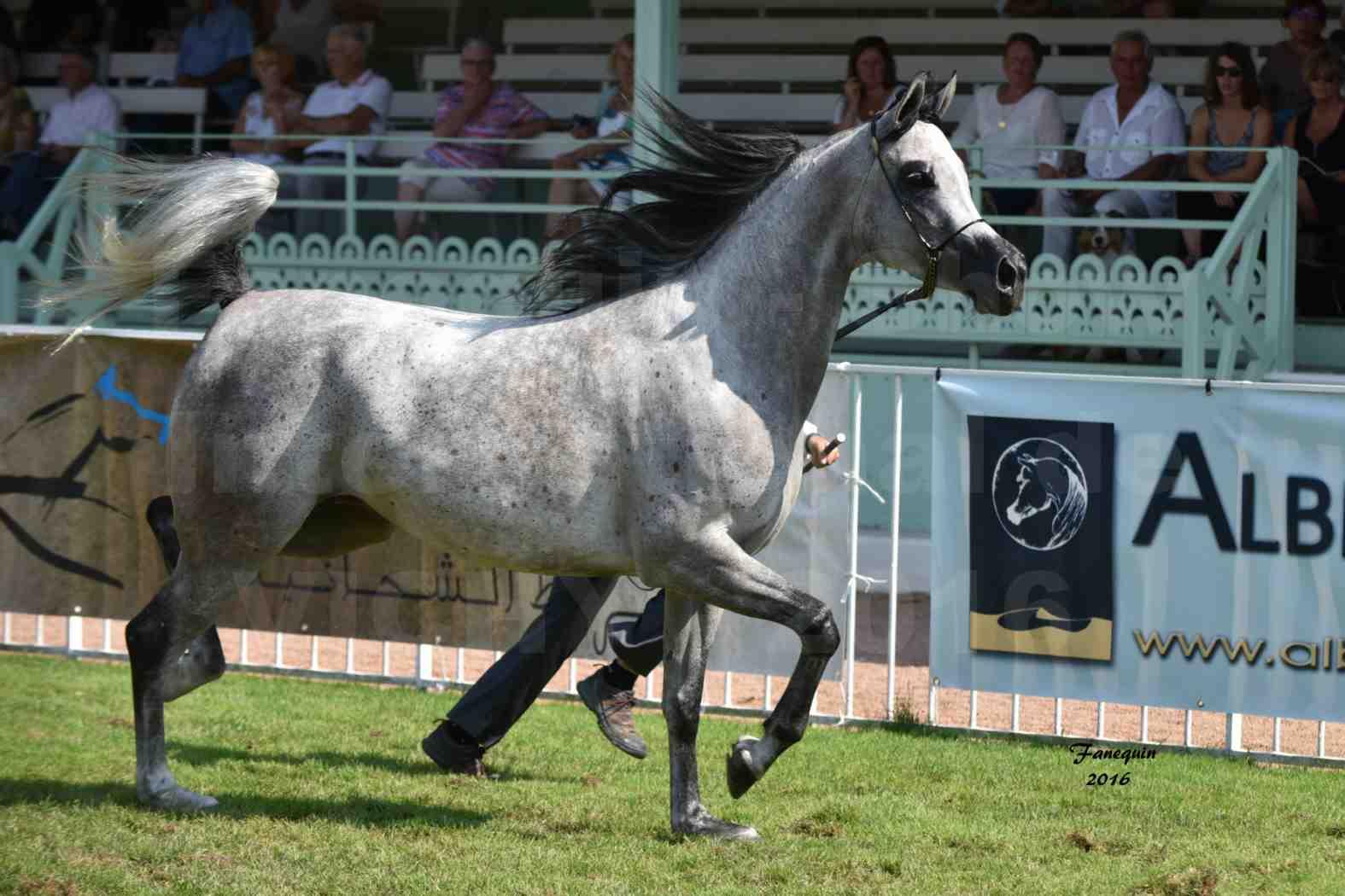 International Arabian Horse Show B de VICHY 2016 - ISABELLA - Notre Sélection - 04
