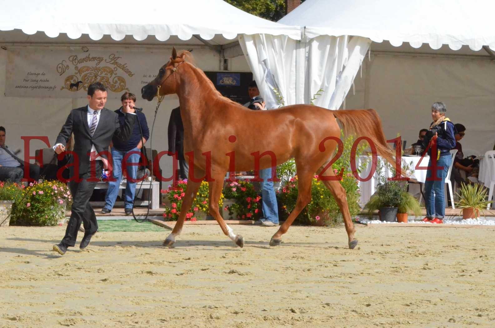 CHAMPIONNAT DE FRANCE 2014 A POMPADOUR - Sélection - LUTFINAH JA - 40