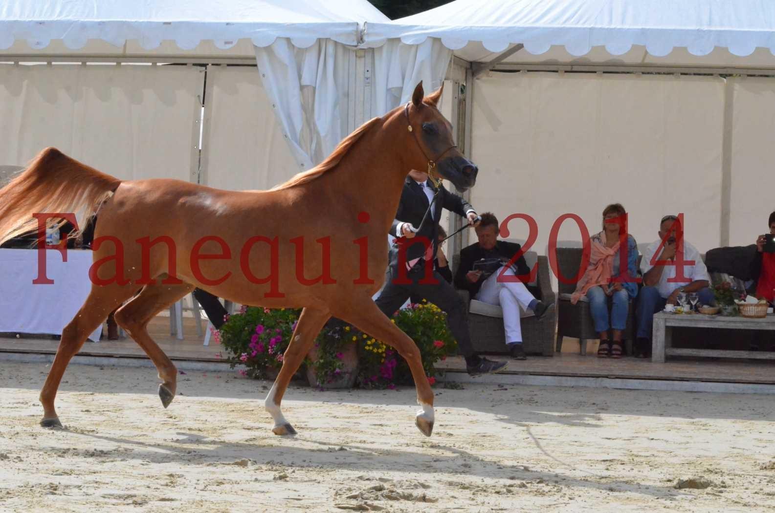 CHAMPIONNAT DE FRANCE 2014 A POMPADOUR - Sélection - LUTFINAH JA - 21