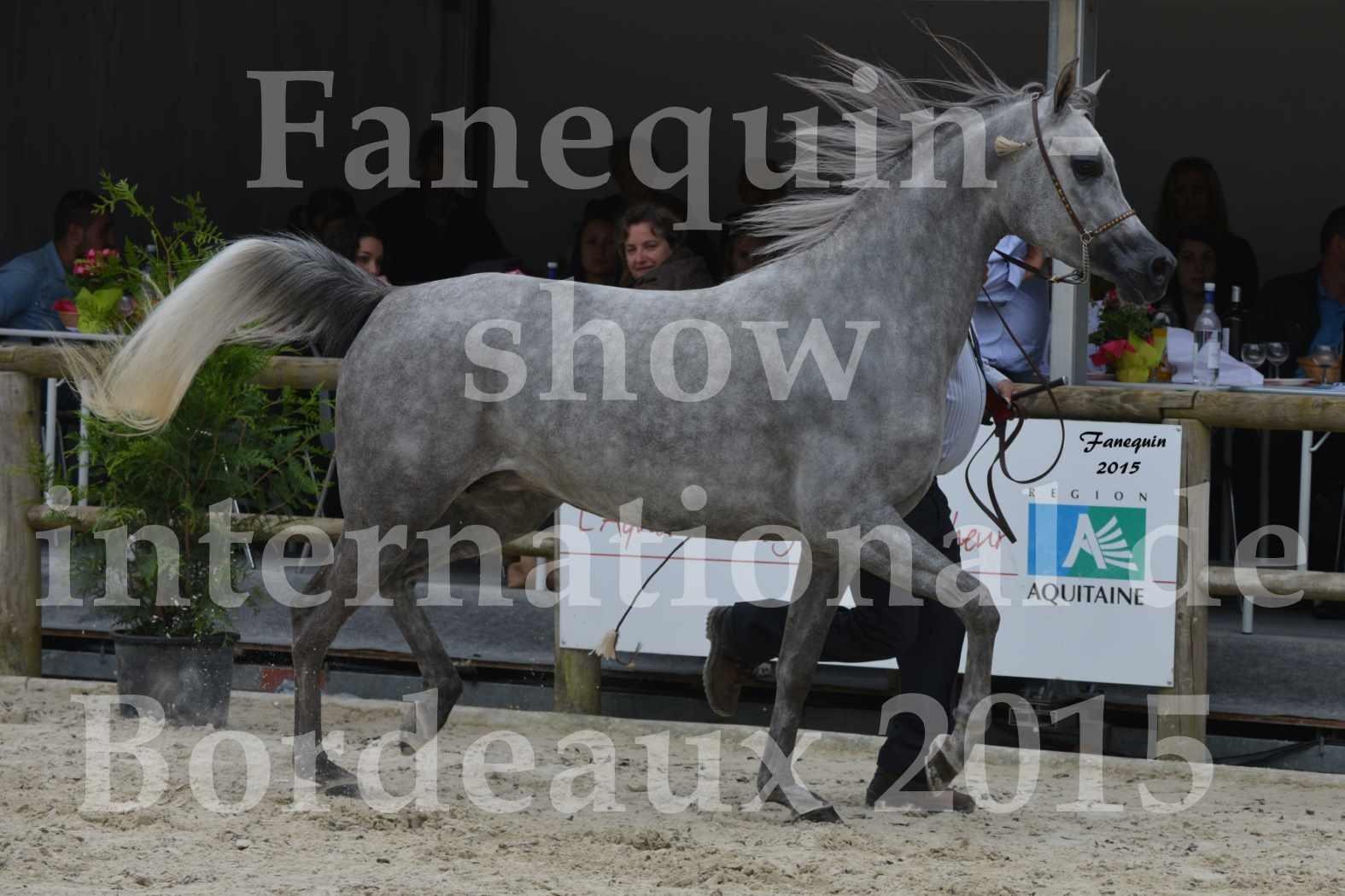 Salon Equitaine de Bordeaux 2015 - Show International de chevaux ARABES - 3