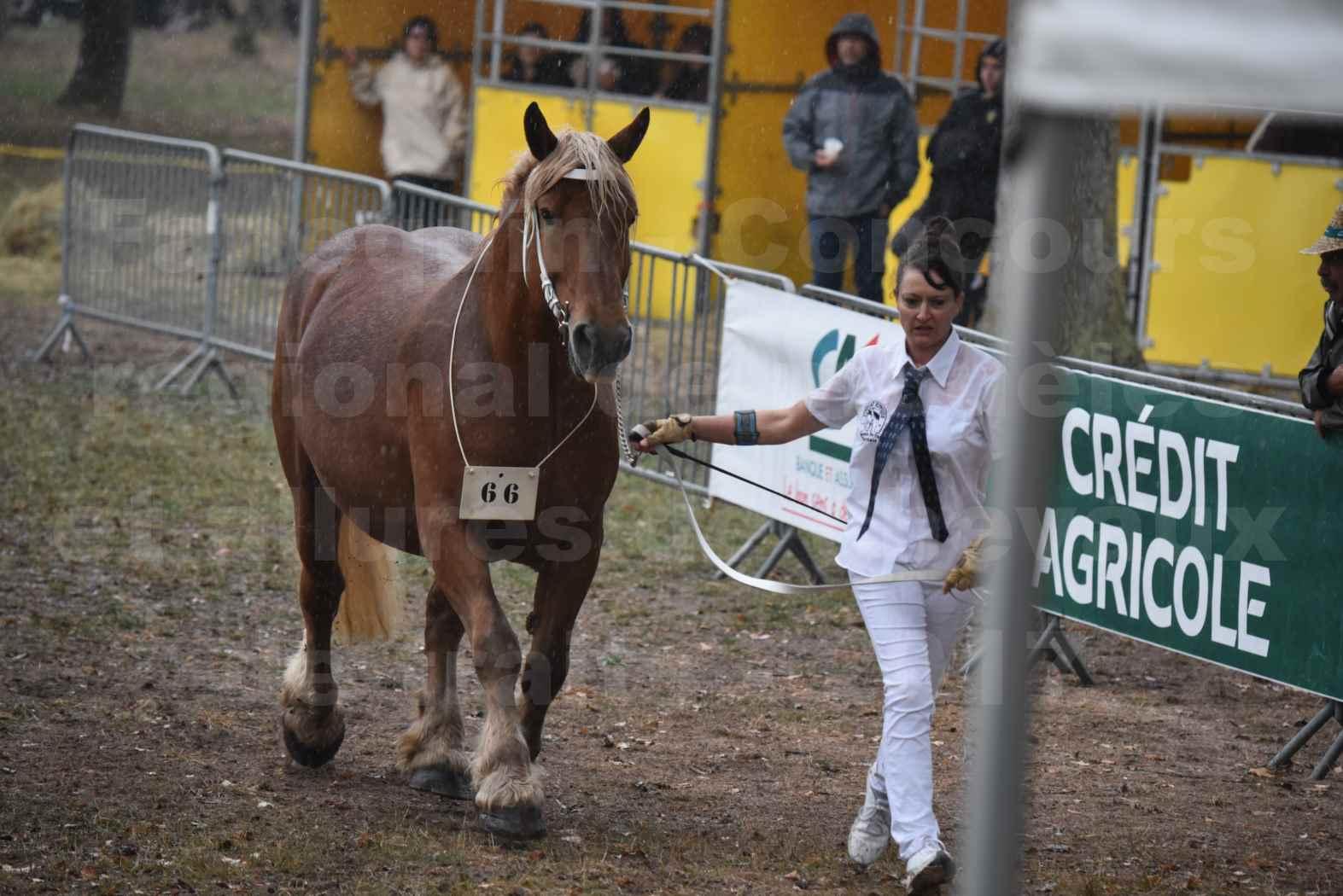 Concours Régional de chevaux de traits en 2017 - Trait COMTOIS - Jument suitée - ROXIE 7 - 17