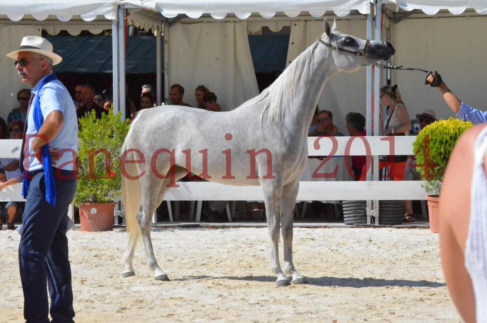 Concours national de Nîmes 2014 - Championnat Femelles Juniors - VOLODIA DE LAFON - 15