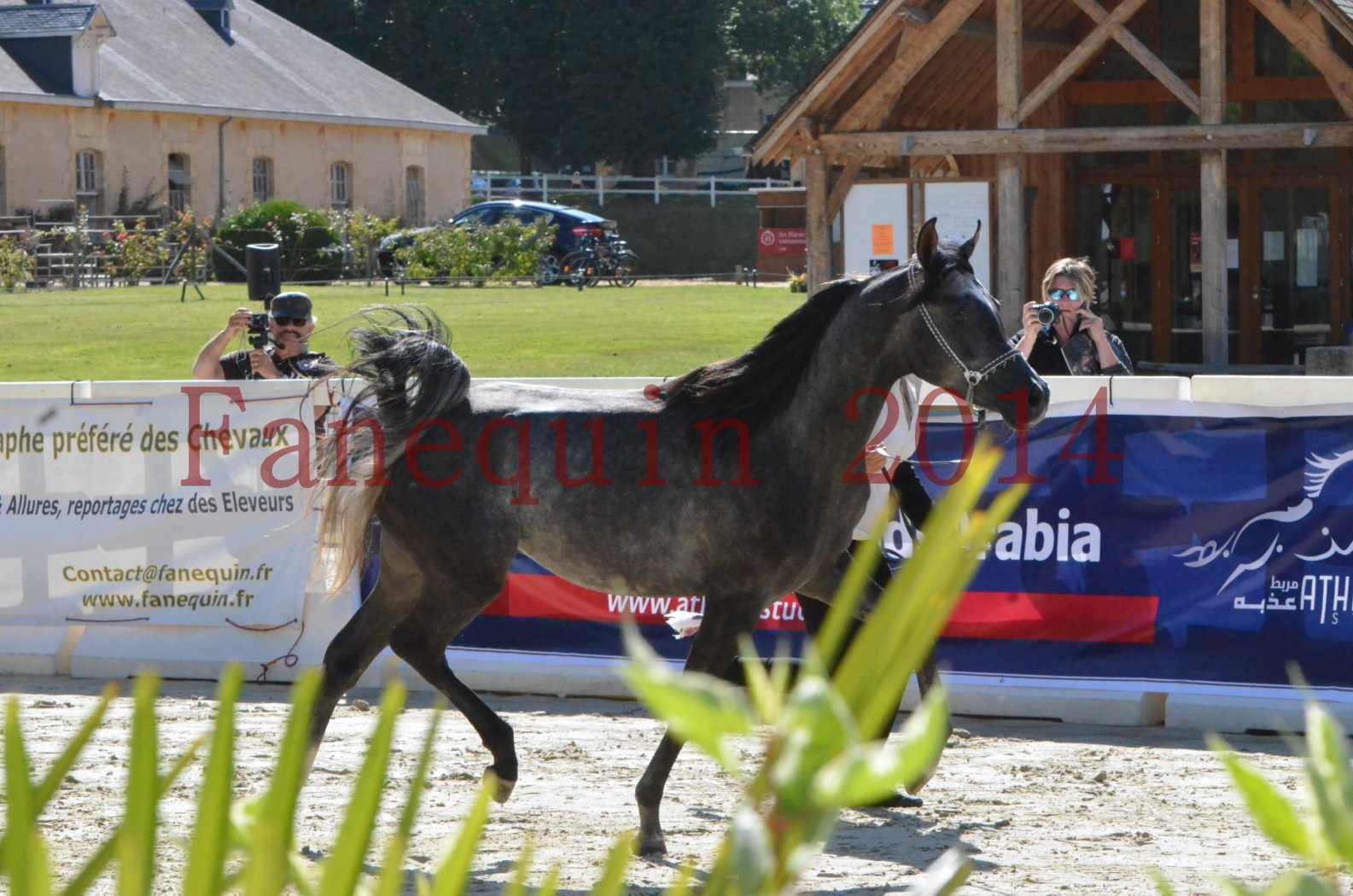Championnat de FRANCE 2014 - Amateurs - CHTI KAID D'AUBIN - 15