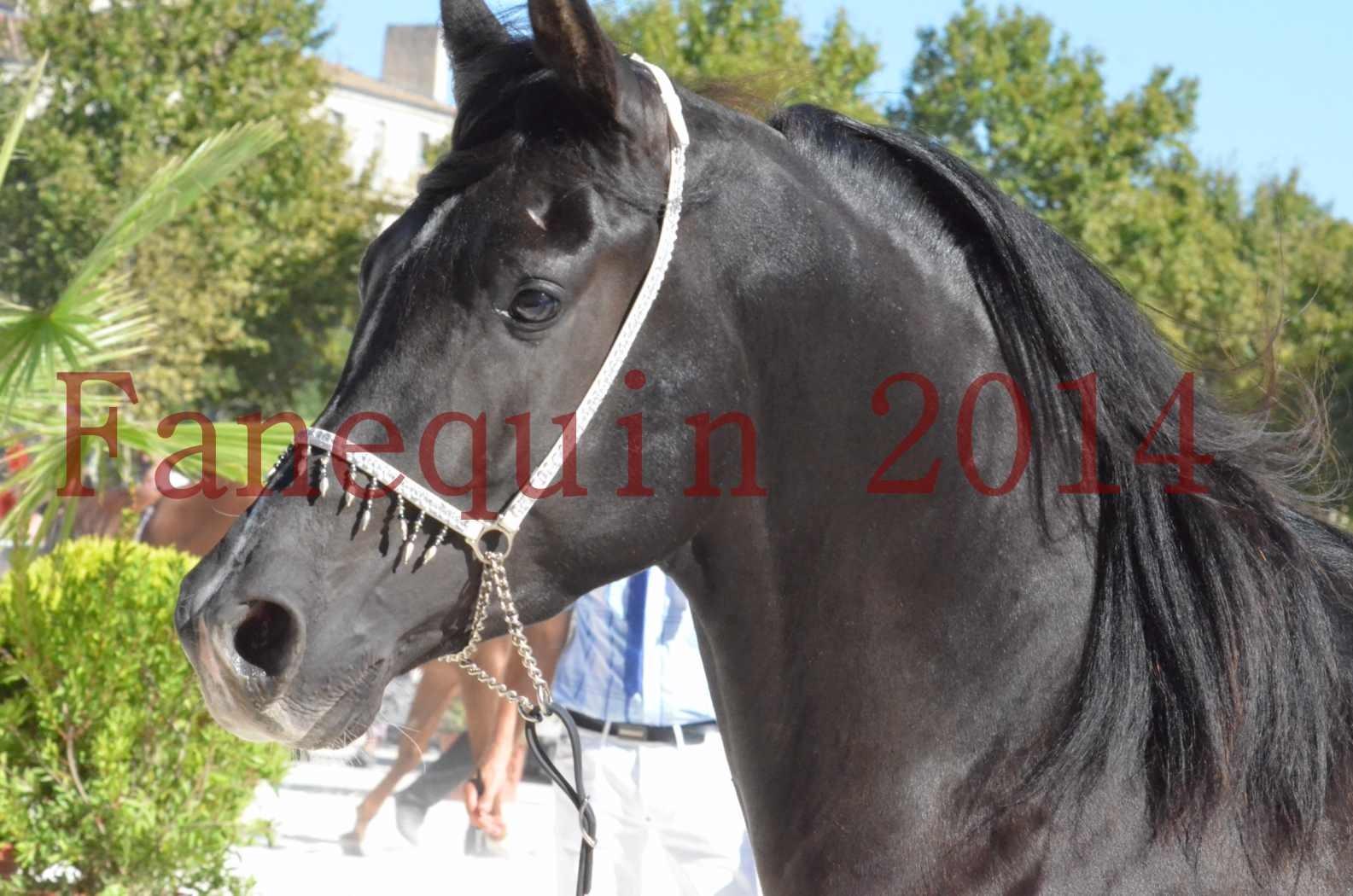Concours National de Nîmes de chevaux ARABES 2014 - Sélection - Portraits - BALTYK DE CHAUMONT - 01