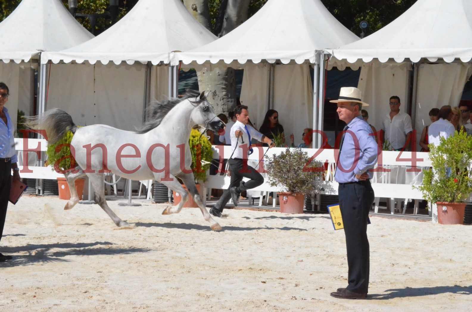 Concours National de Nîmes de chevaux ARABES 2014 - Sélection - SHAOLIN DE NEDJAIA - 01