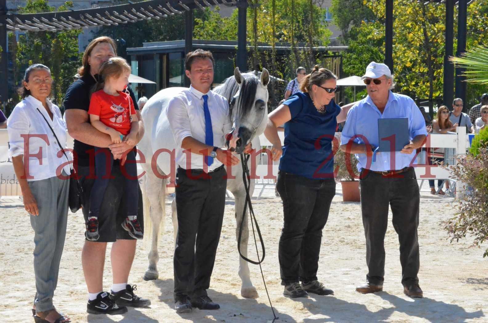 Concours National de Nîmes de chevaux ARABES 2014 - Sélection - SHAOLIN DE NEDJAIA - 87
